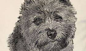 Cairn Terrier swatch image