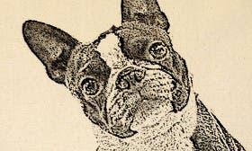 Boston Terrier swatch image