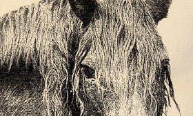 Horse swatch image