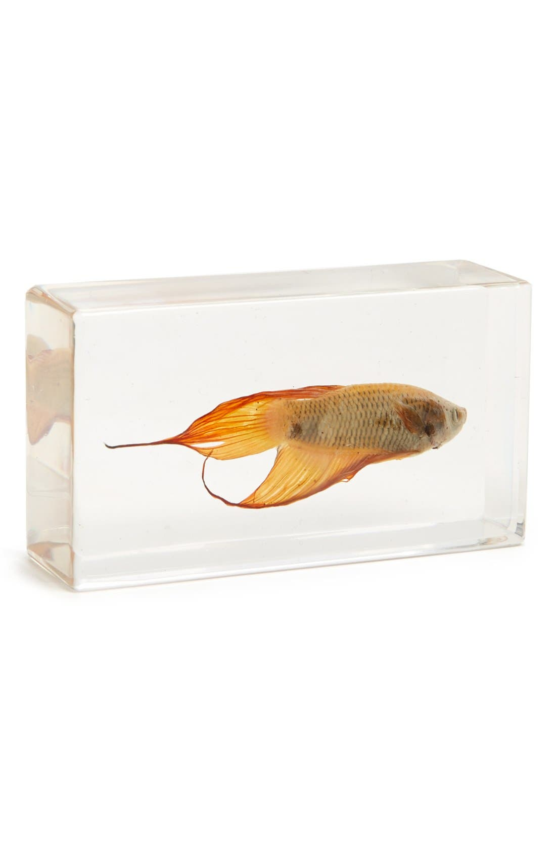 Alternate Image 1 Selected - The Evolution Store Tropical Betta Fish in Resin