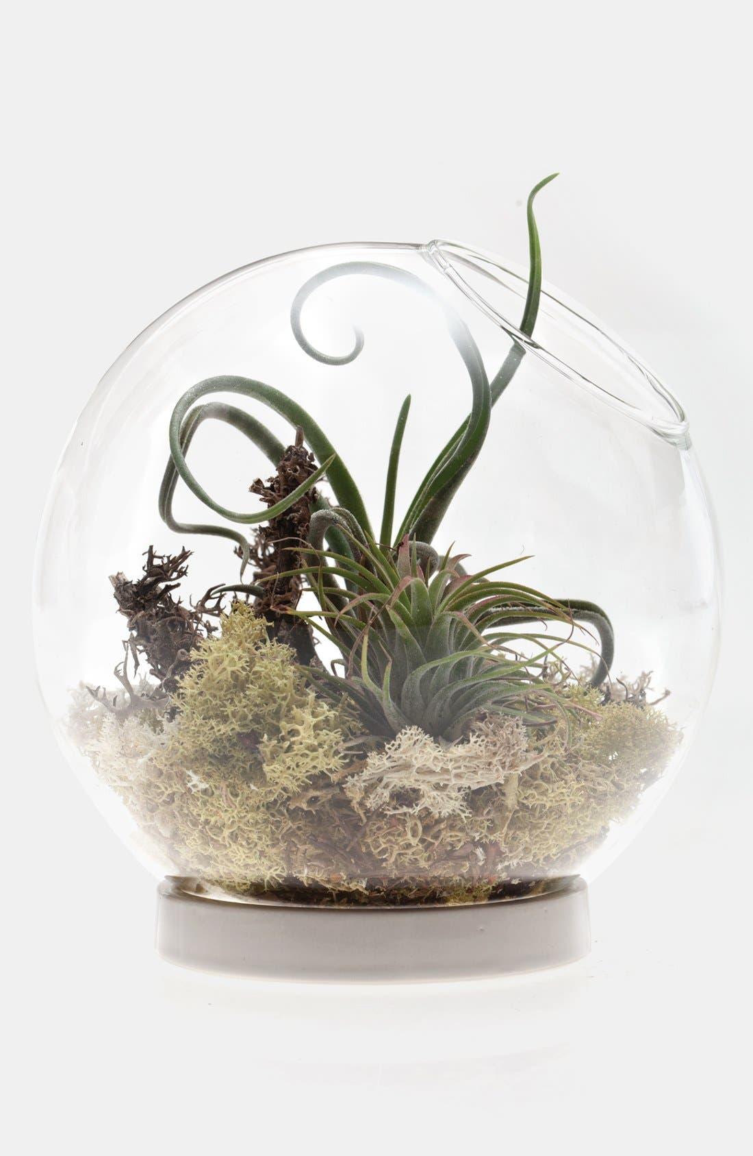 Main Image - Globe Terrarium with Ceramic Base