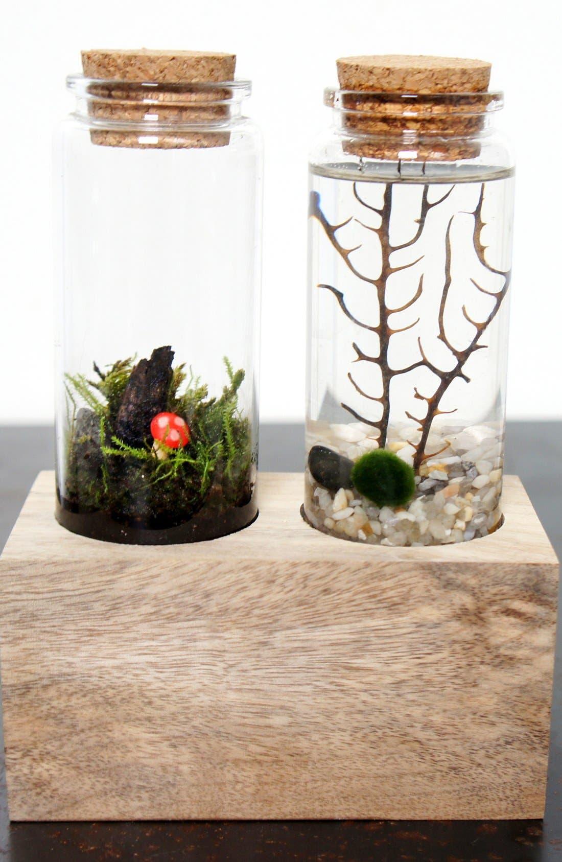 Main Image - Moss + Twigg Land & Sea Terrarium Set