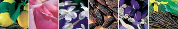 The Guerlinade: bergamot, rose, jasmine, tonka bean, iris and vanilla.