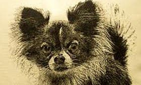 Chihuahua swatch image