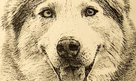 Husky swatch image