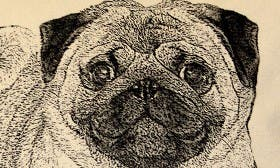 Pug swatch image selected