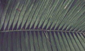 Green/ Multi swatch image