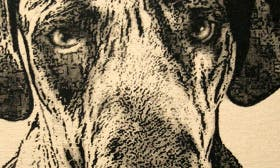 Great Dane swatch image
