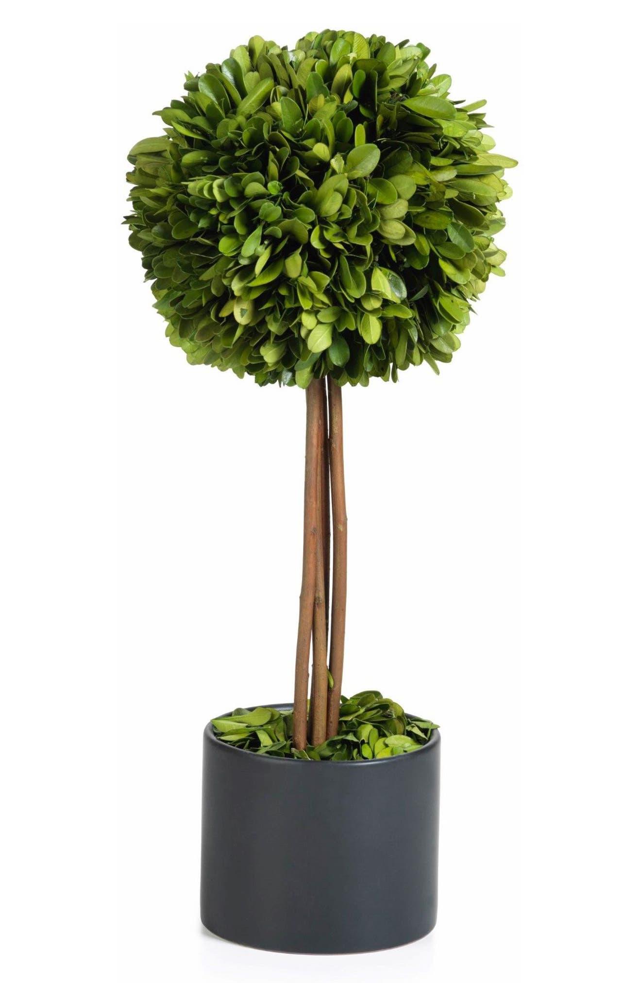 Main Image - Zodax Boxwood Topiary Decoration
