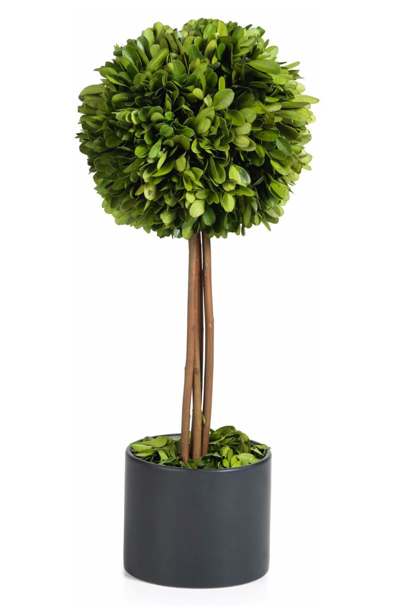 Boxwood Topiary Decoration,                         Main,                         color, Green/ Black