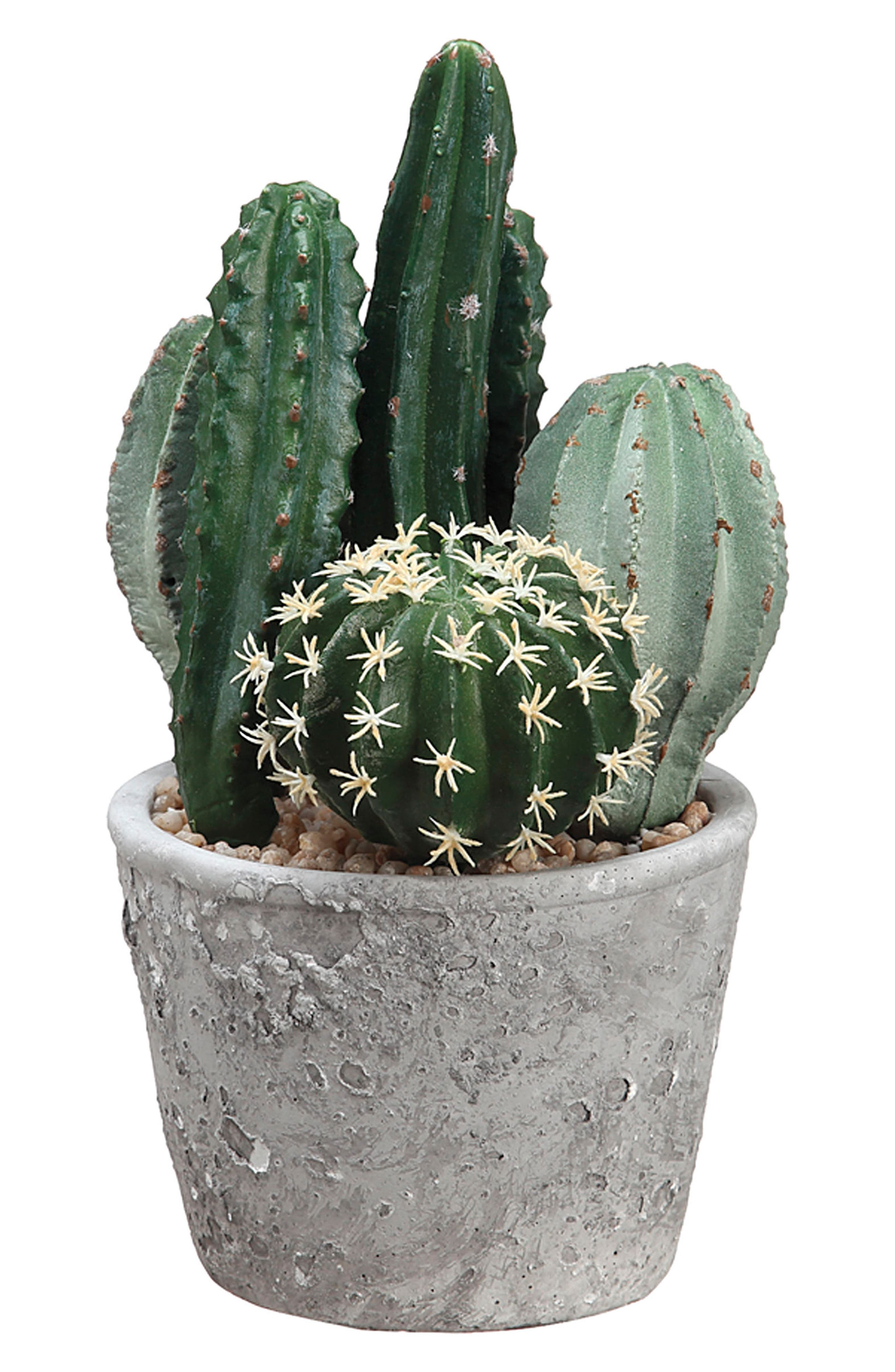 Cactus Garden Decoration,                             Main thumbnail 1, color,                             Green