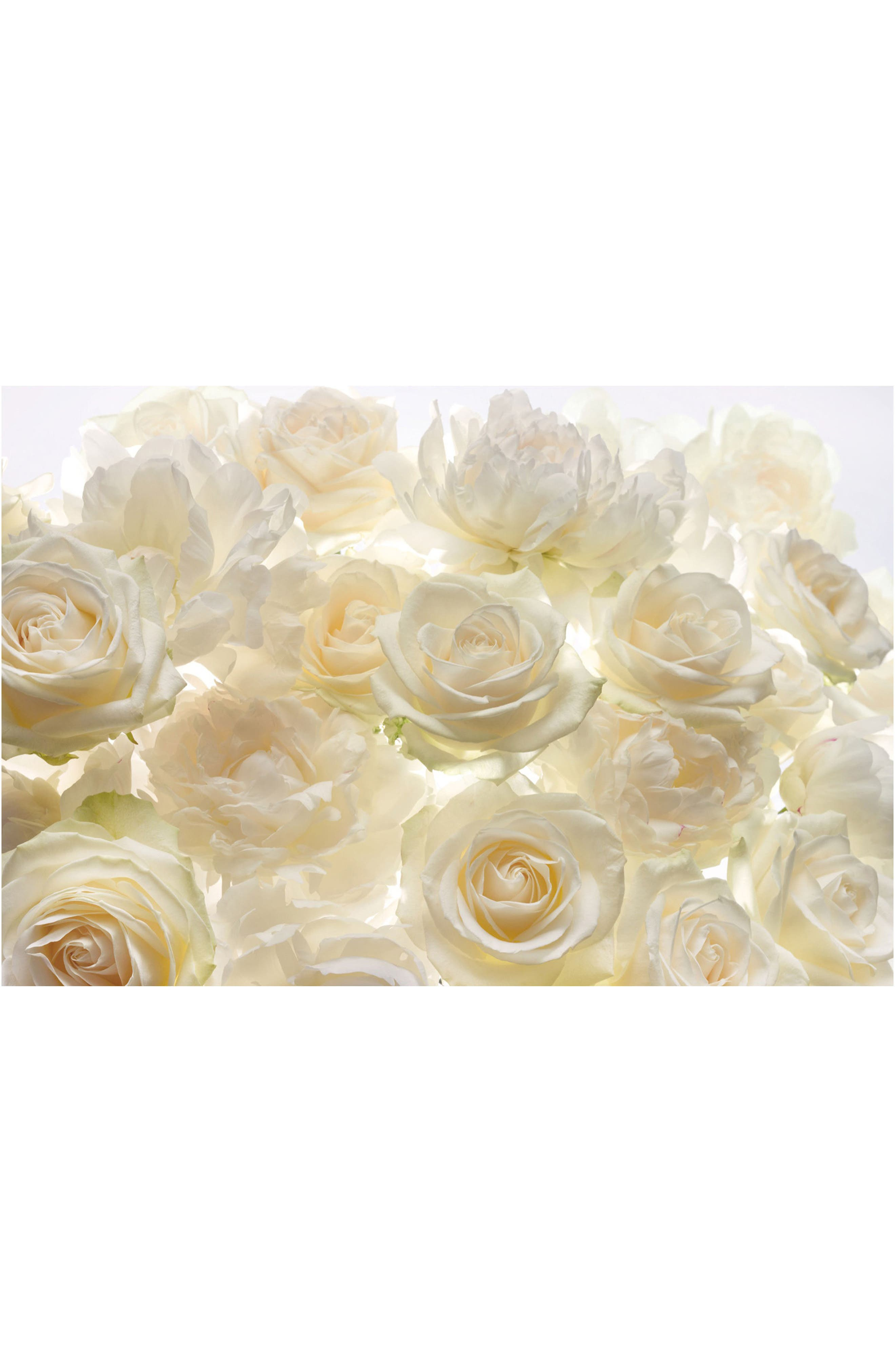 Ivory Rose Wall Mural,                         Main,                         color, White Off-White