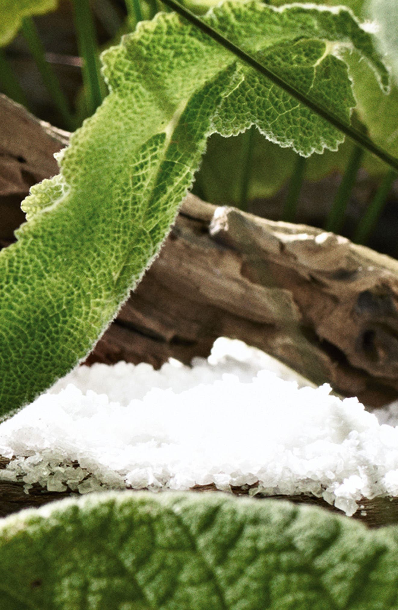 Alternate Image 4  - Jo Malone London™ Wood Sage & Sea Salt Body Cream