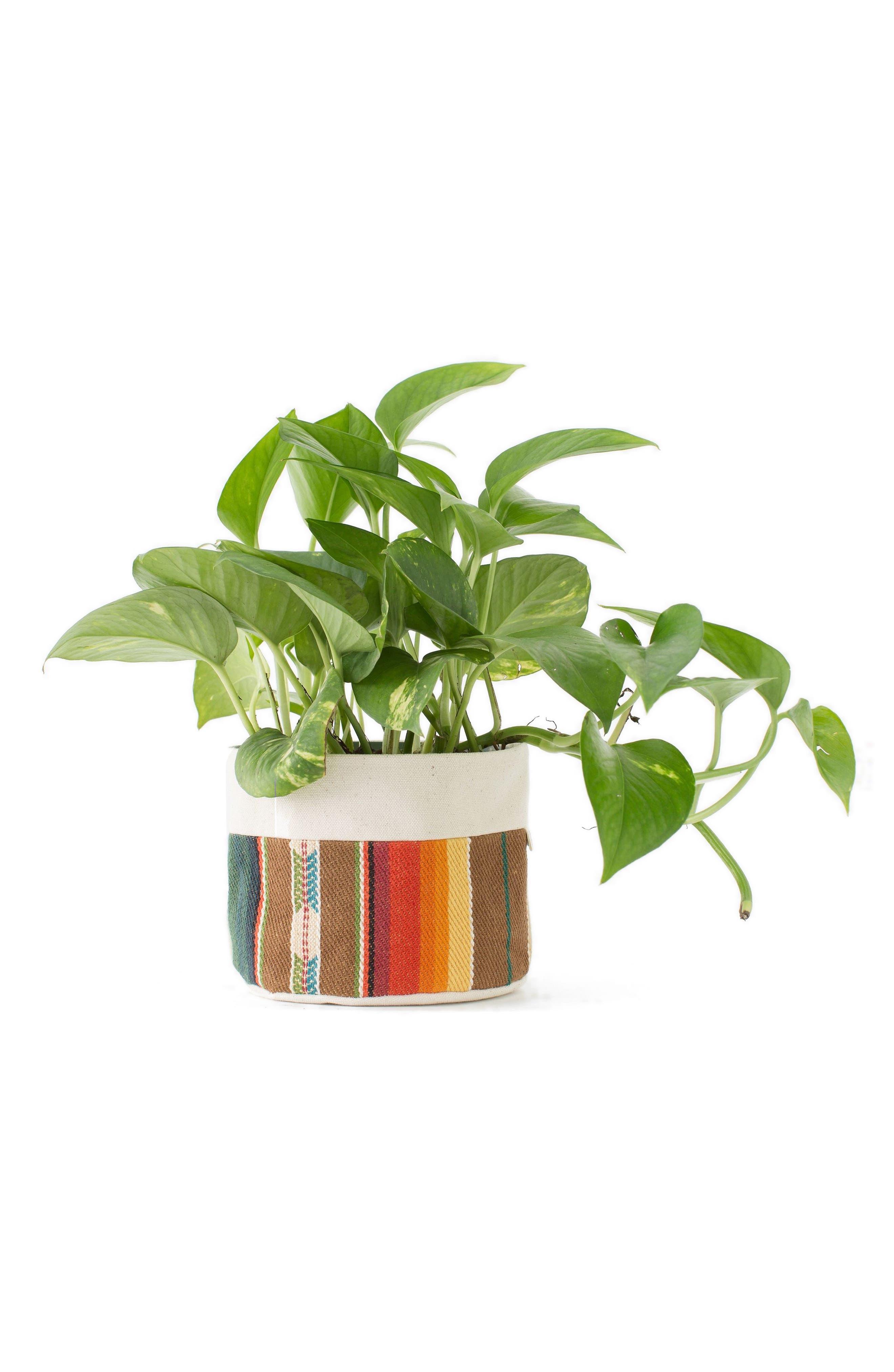 GOOD COMPANY WARES 6-Inch Striped Canvas Planter