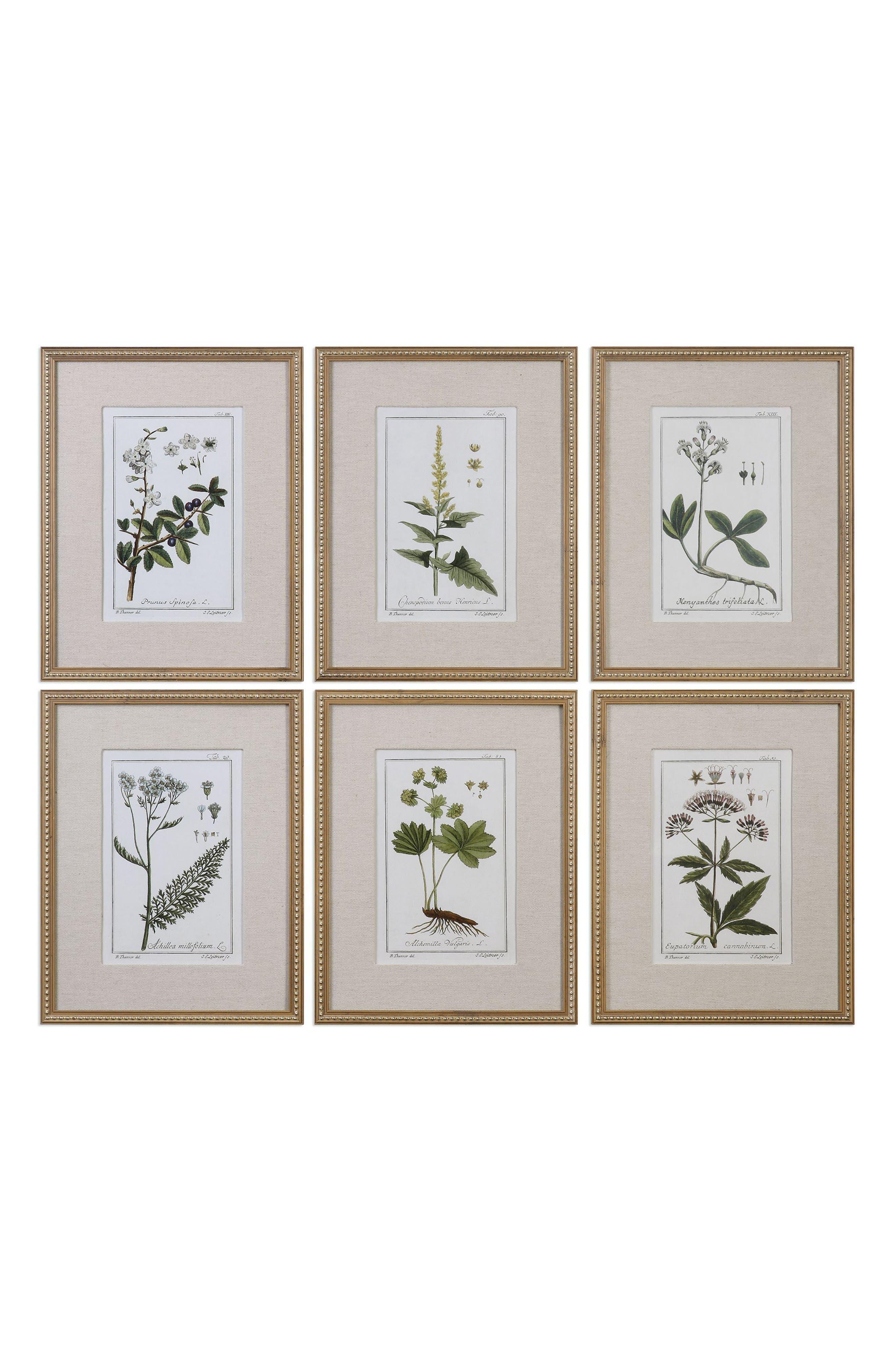 Floral Botanical Set of 6 Art Prints,                         Main,                         color, Brown