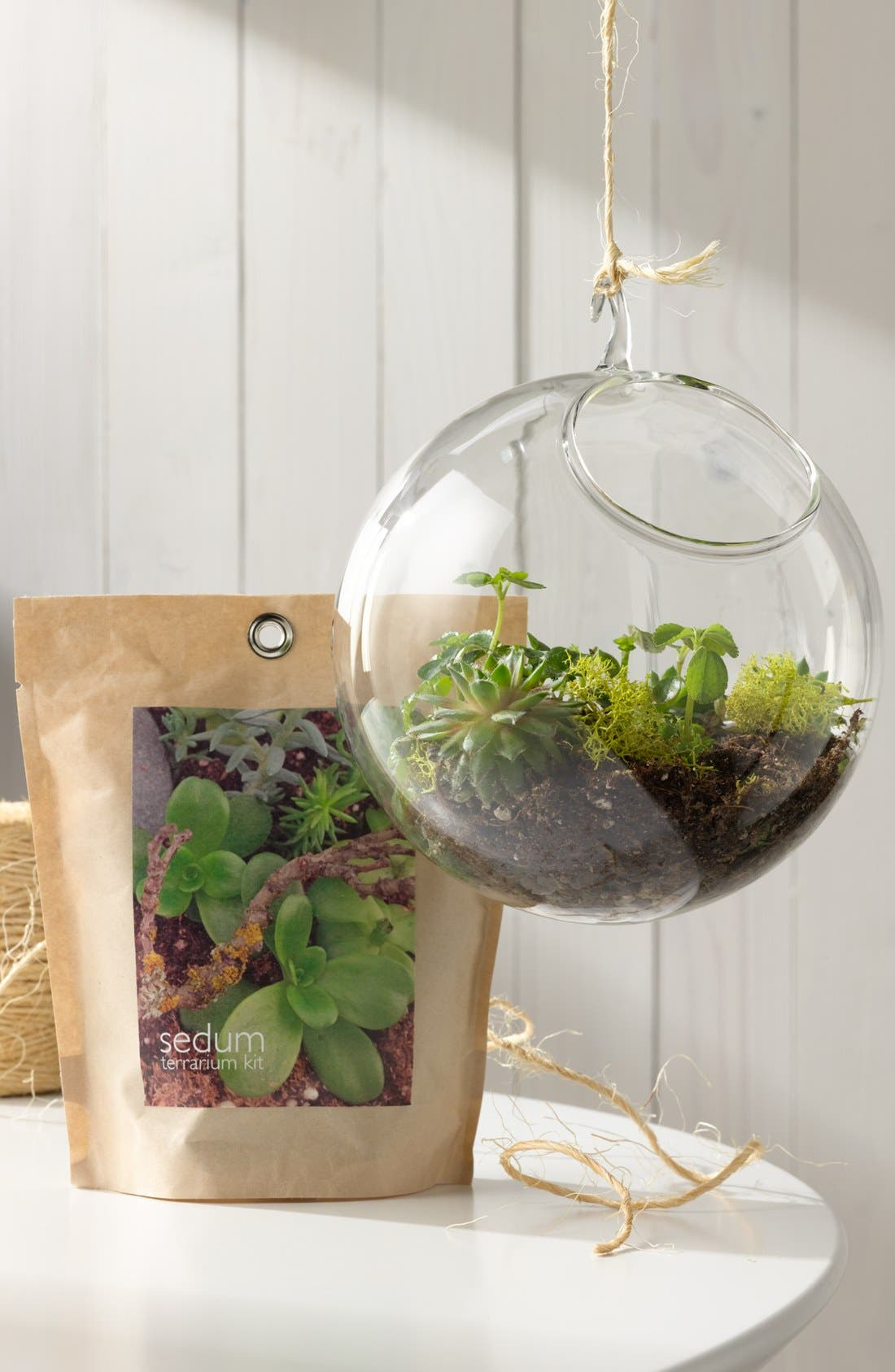 Alternate Image 3  - Sedum Terrarium Kit