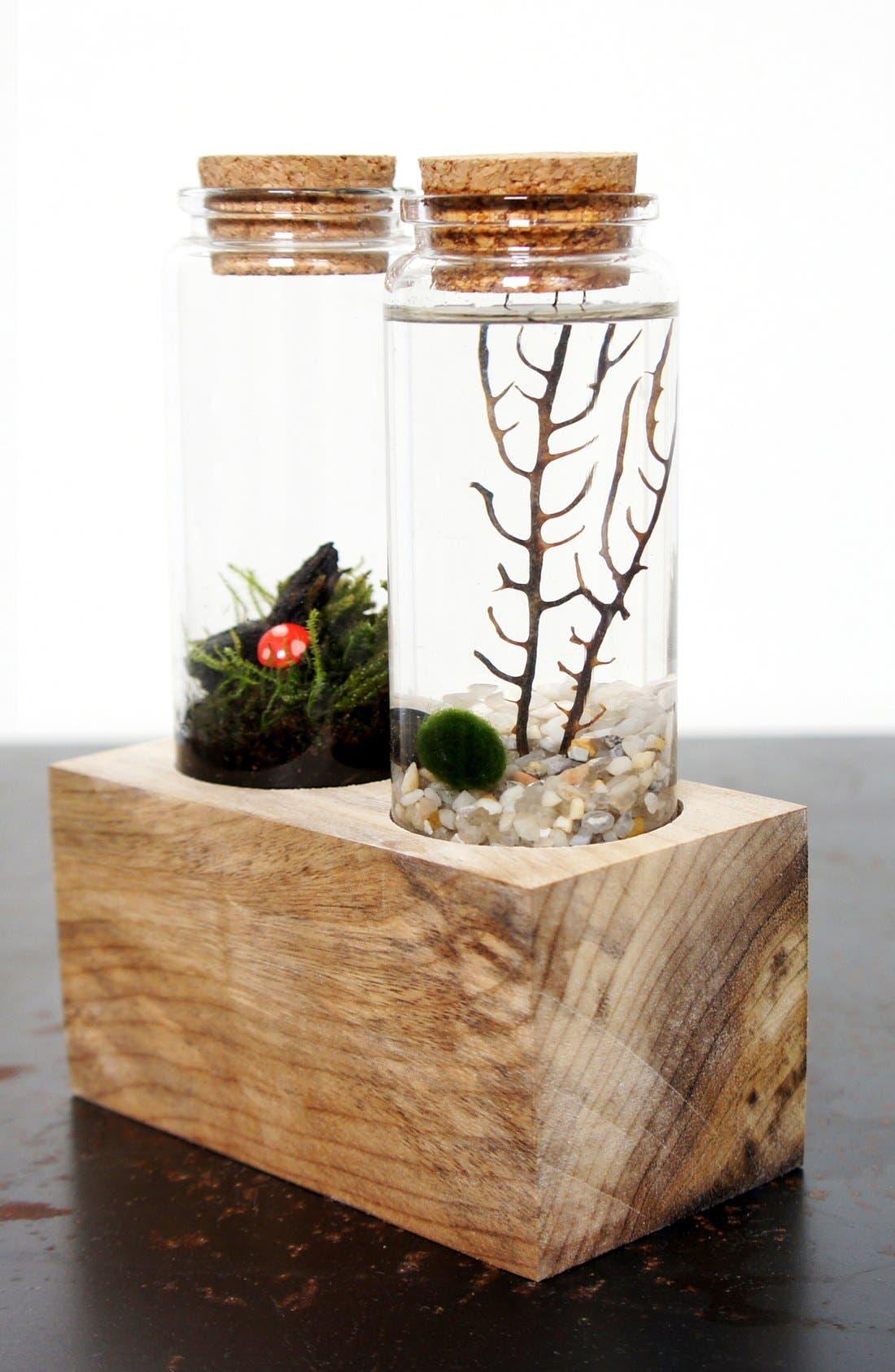 Alternate Image 3  - Moss + Twigg Land & Sea Terrarium Set
