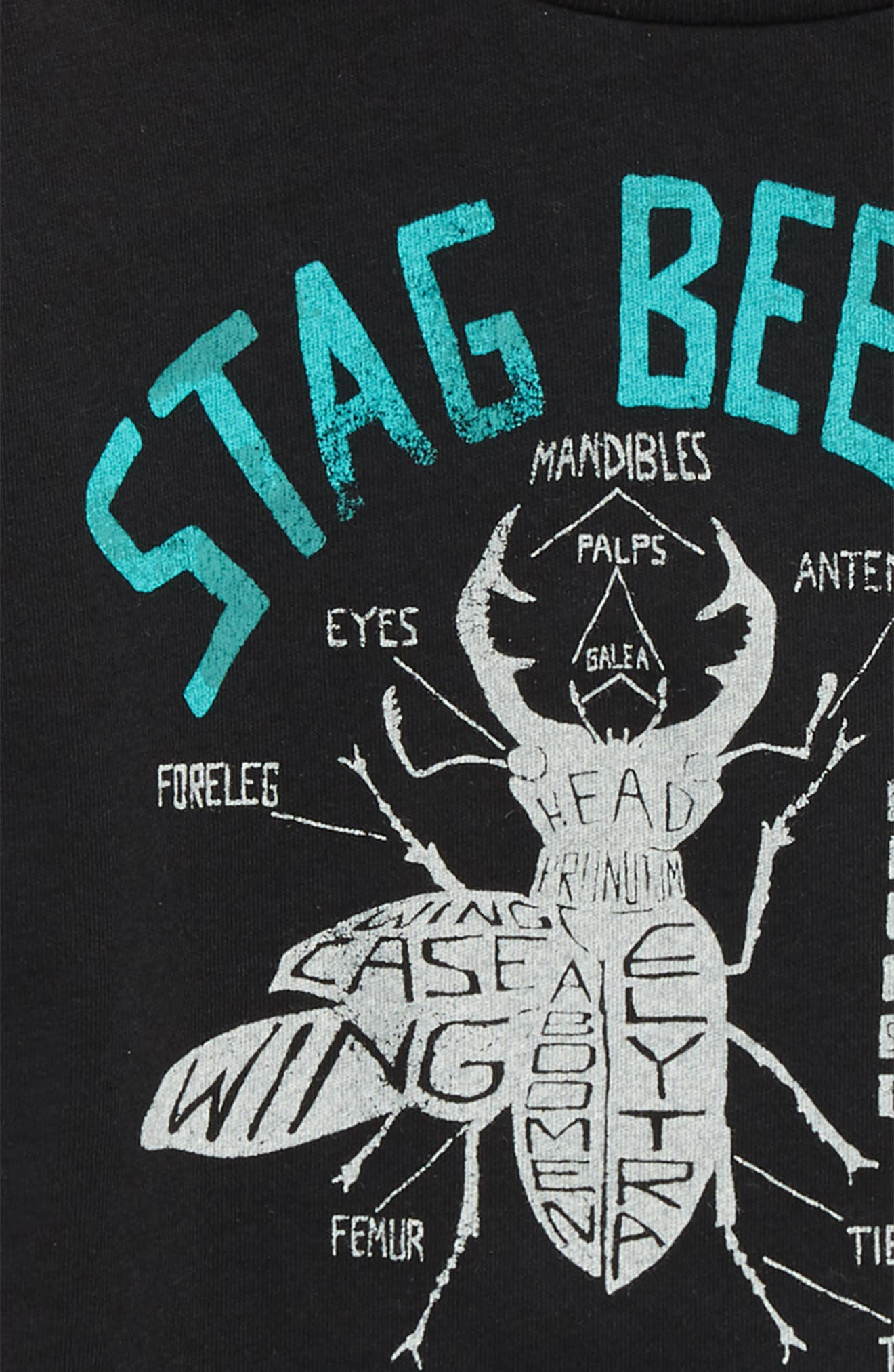 Stag Beetle Graphic T-Shirt,                             Alternate thumbnail 2, color,                             Black