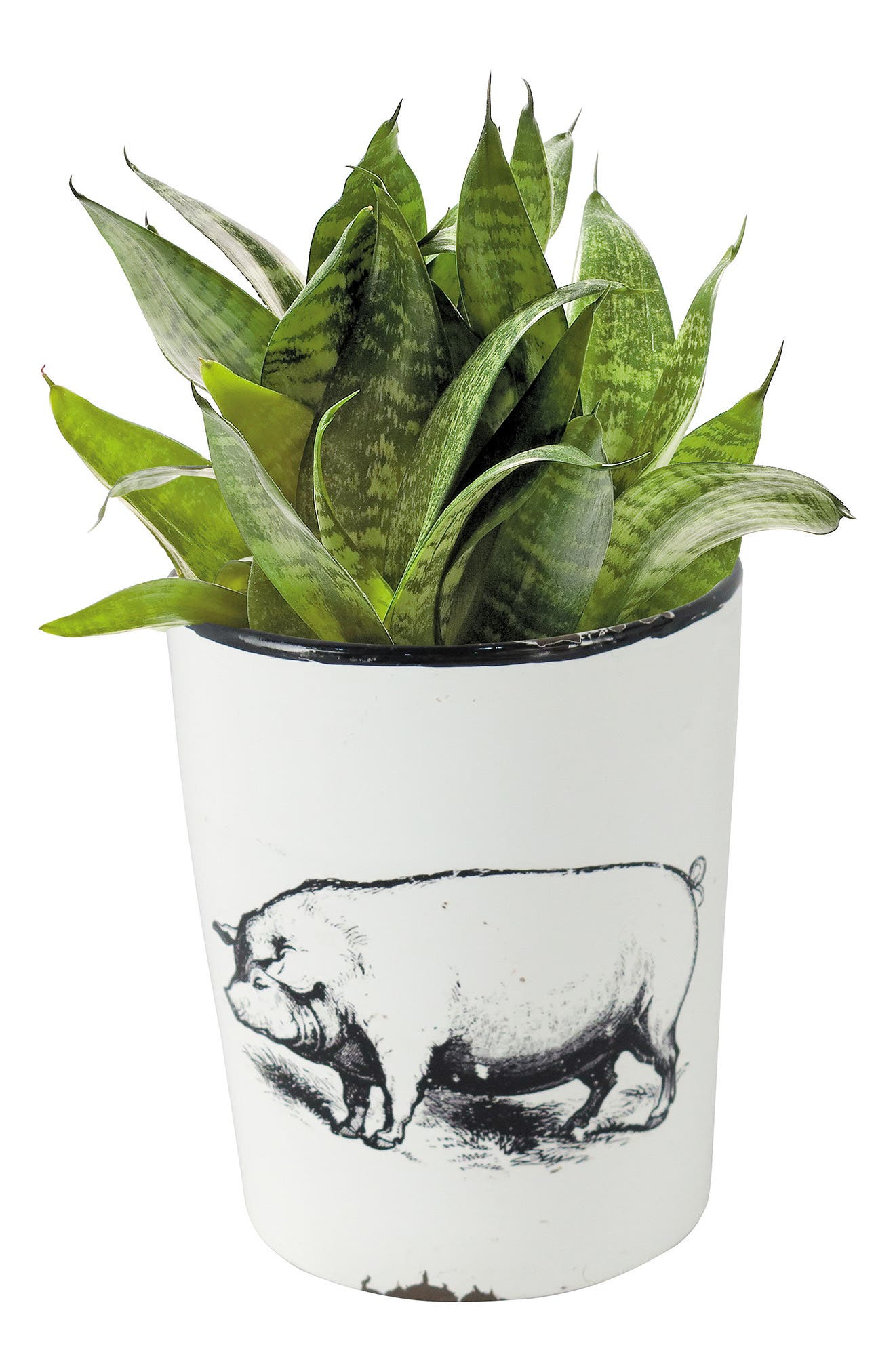 Enamel Pig Planter with Handle,                         Main,                         color, Metal