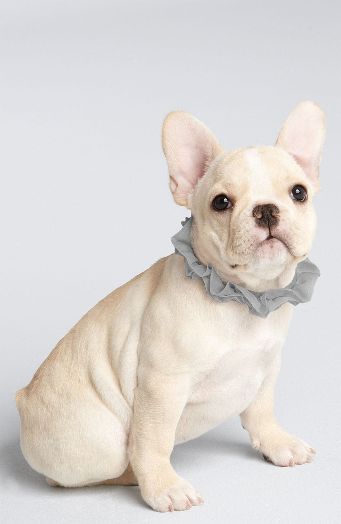 Alternate Image 1 Selected - Juicy Couture 'Ruffle Charm' Collar