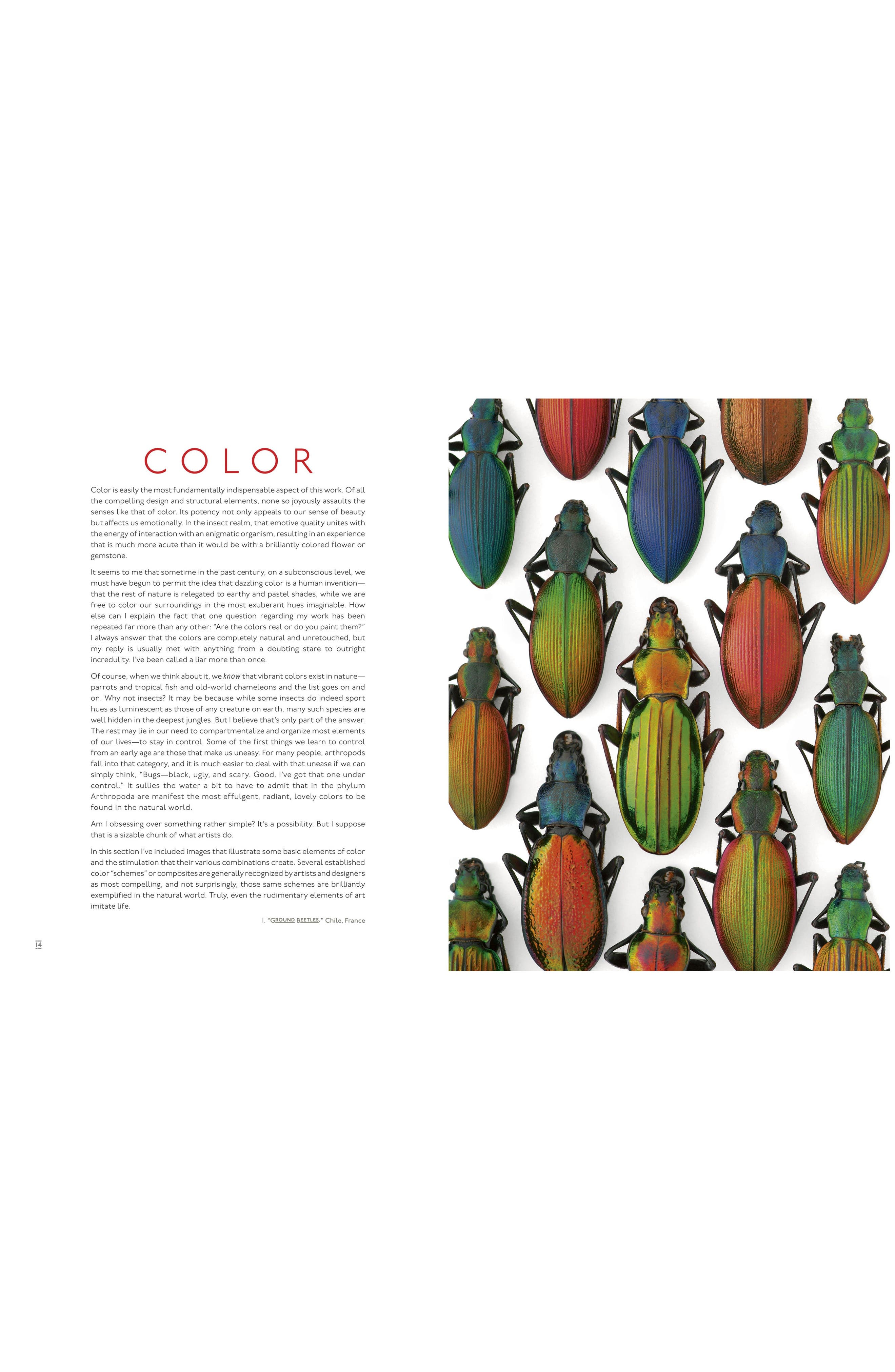 'Pheromone: The Insect Artwork of Christopher Marley' Book,                             Alternate thumbnail 2, color,                             White
