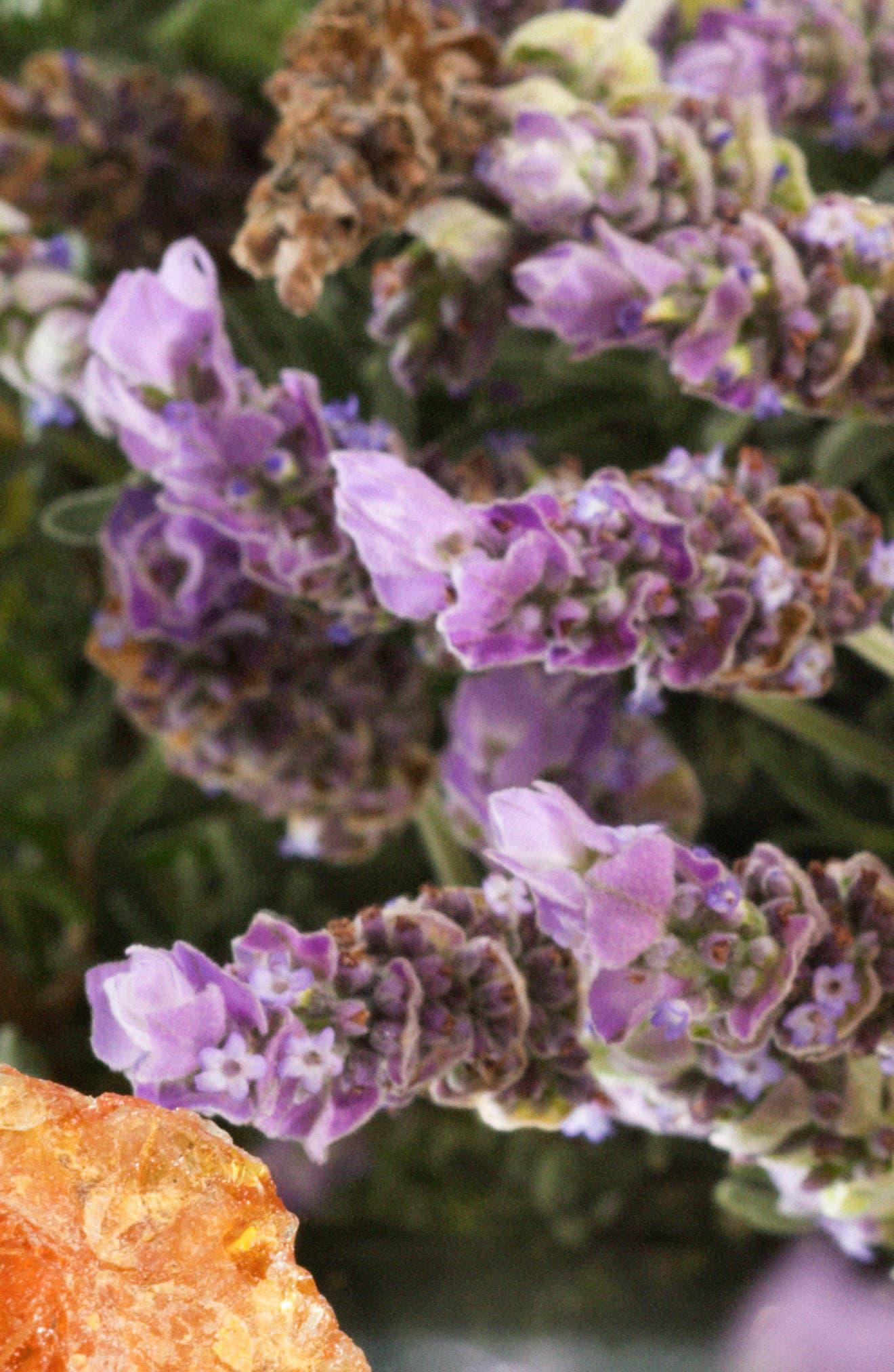 Alternate Image 4  - Jo Malone London™ Amber & Lavender Cologne (3.4 oz.)