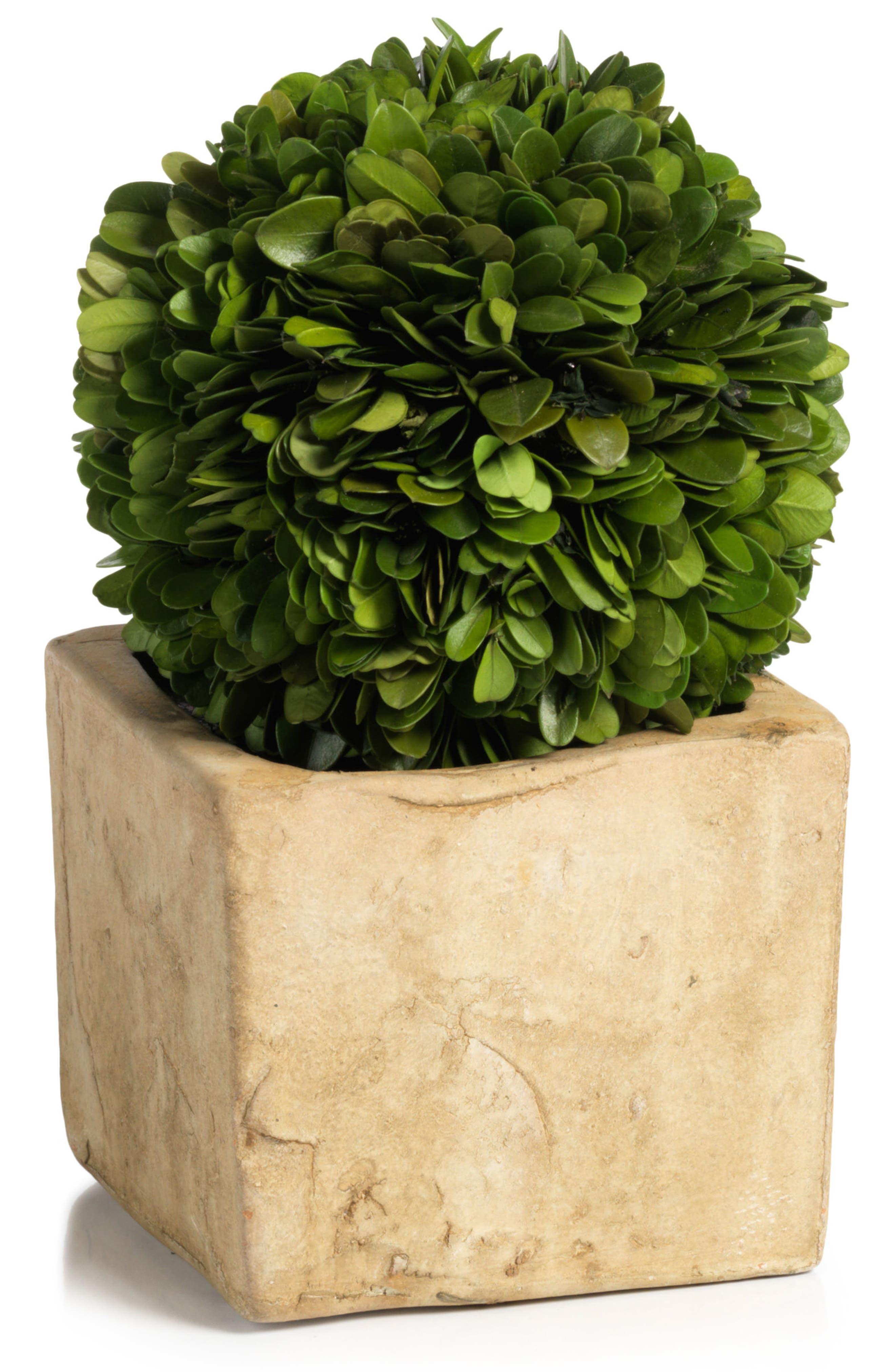 Carina Boxwood Topiary Decoration,                             Main thumbnail 1, color,                             Green