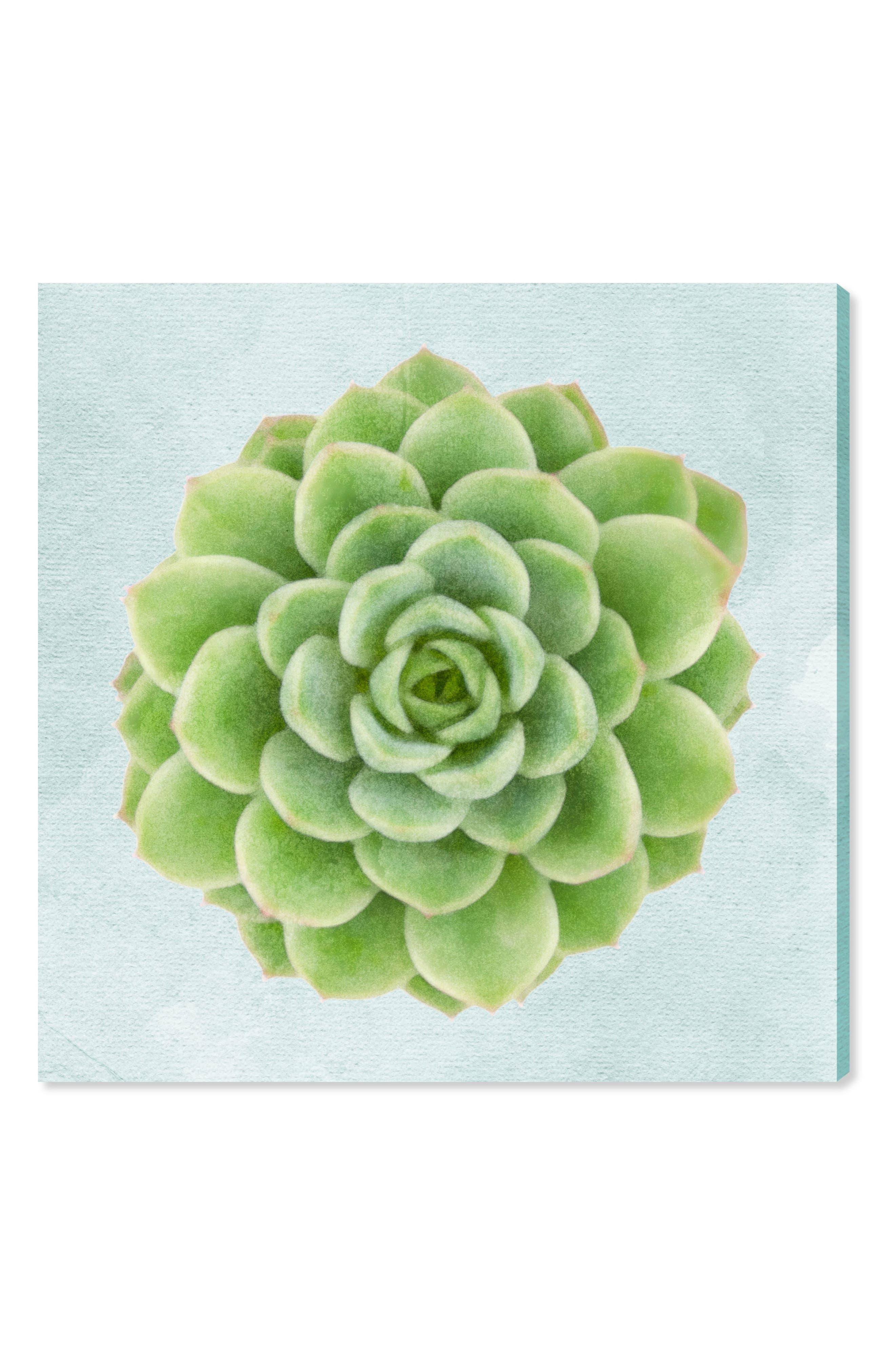 Succulent Dream I Canvas Wall Art,                         Main,                         color, Green