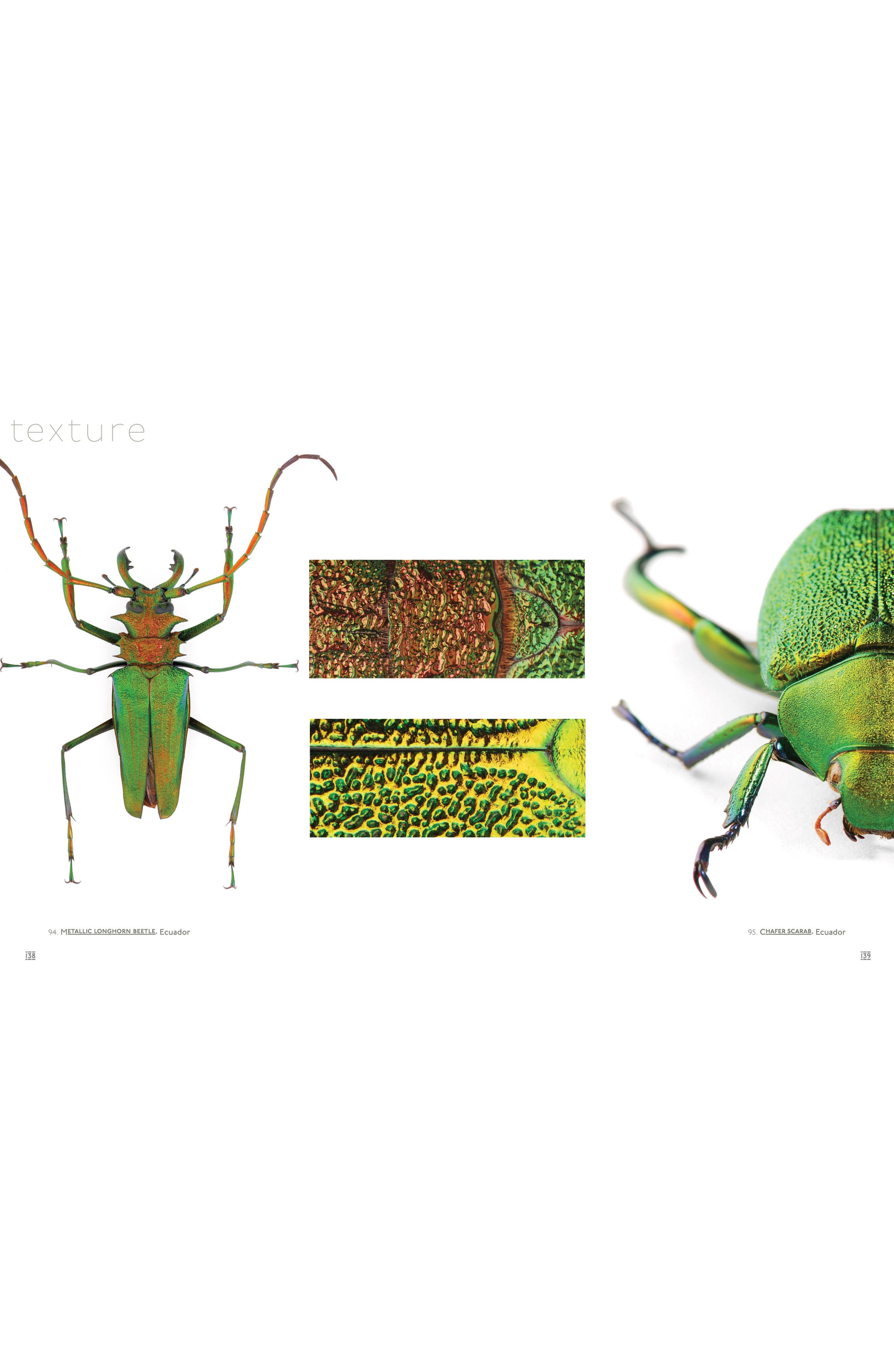 'Pheromone: The Insect Artwork of Christopher Marley' Book,                             Alternate thumbnail 4, color,                             White