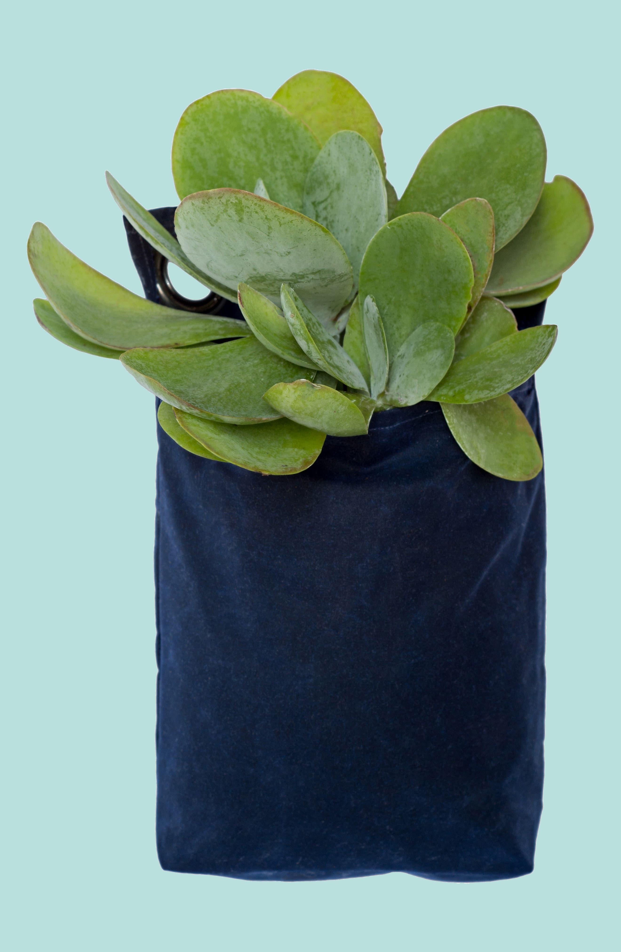 Small Waxed Canvas GrowPack Planter,                             Main thumbnail 1, color,                             Navy