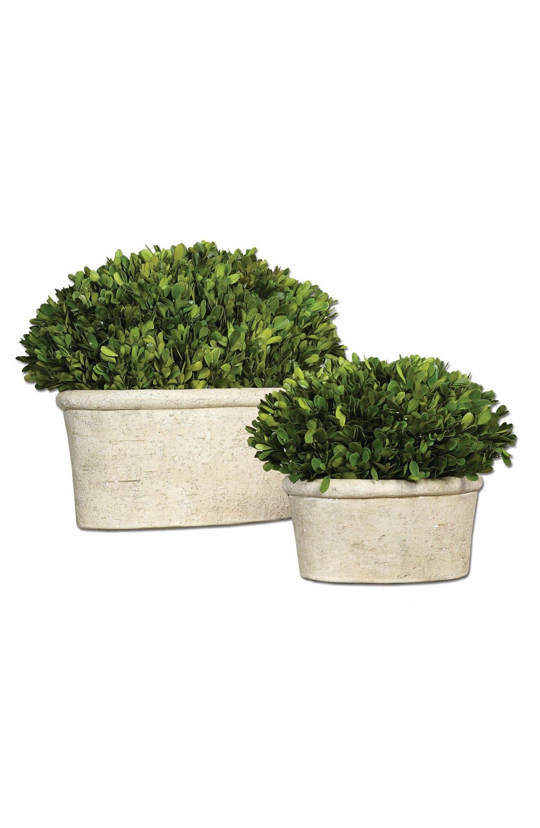 Main Image - Uttermost 'Oval Domes' Preserved Boxwood Decorations (Set of 2)