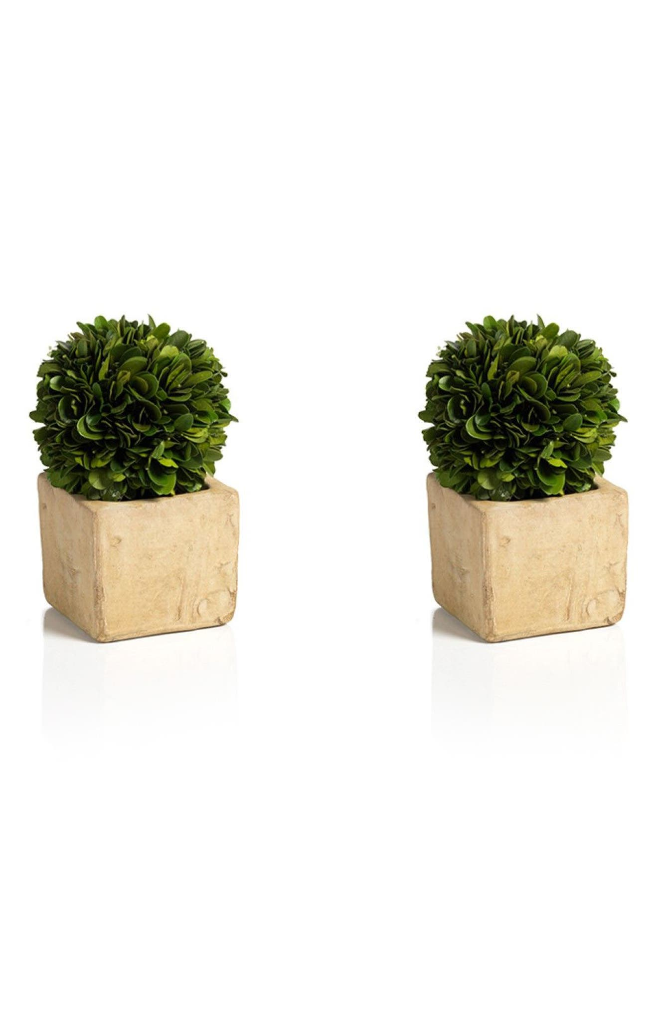 Carina Set of 2 Topiary Decorations,                             Main thumbnail 1, color,                             Green