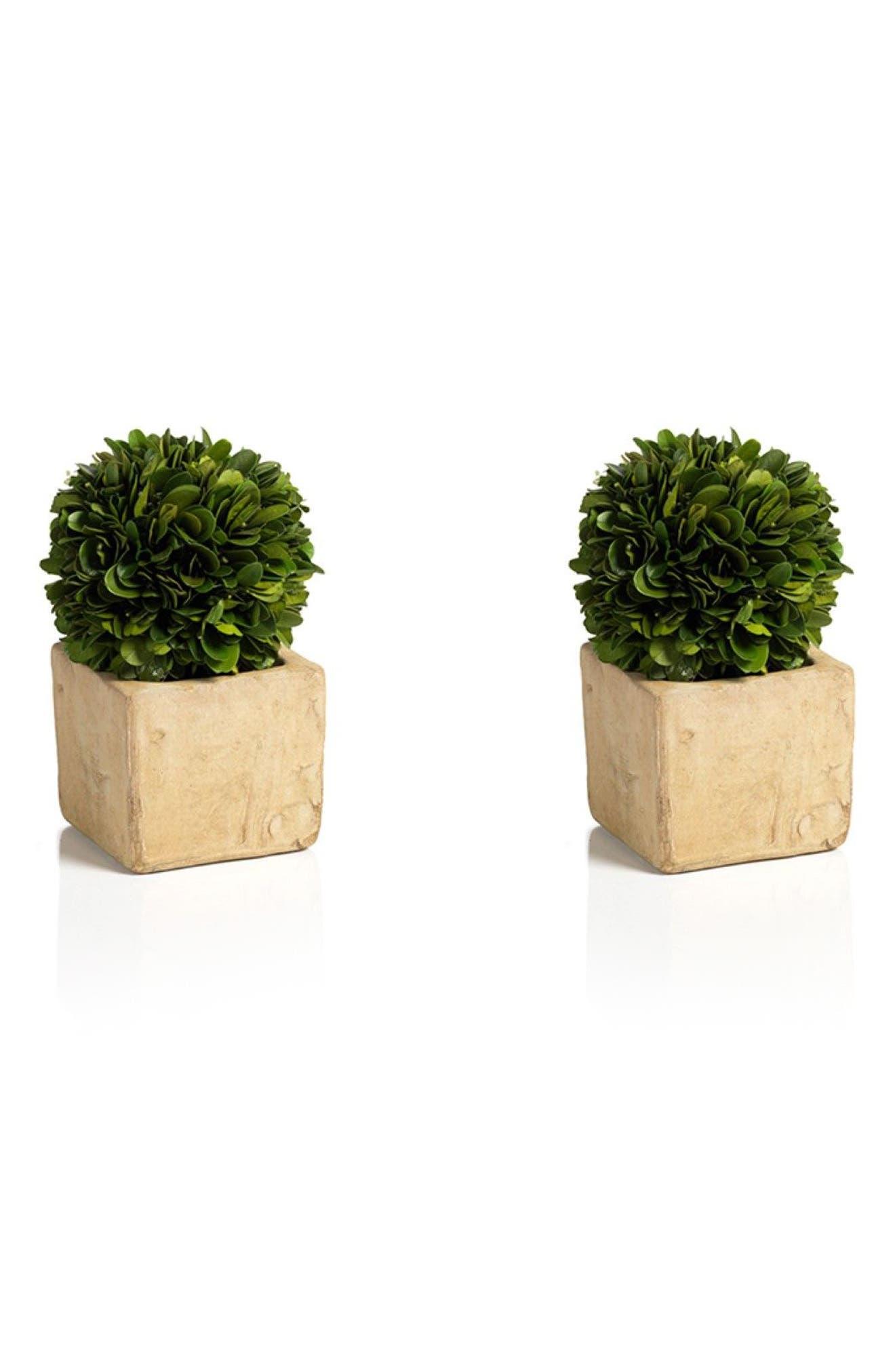 Main Image - Zodax Carina Set of 2 Topiary Decorations