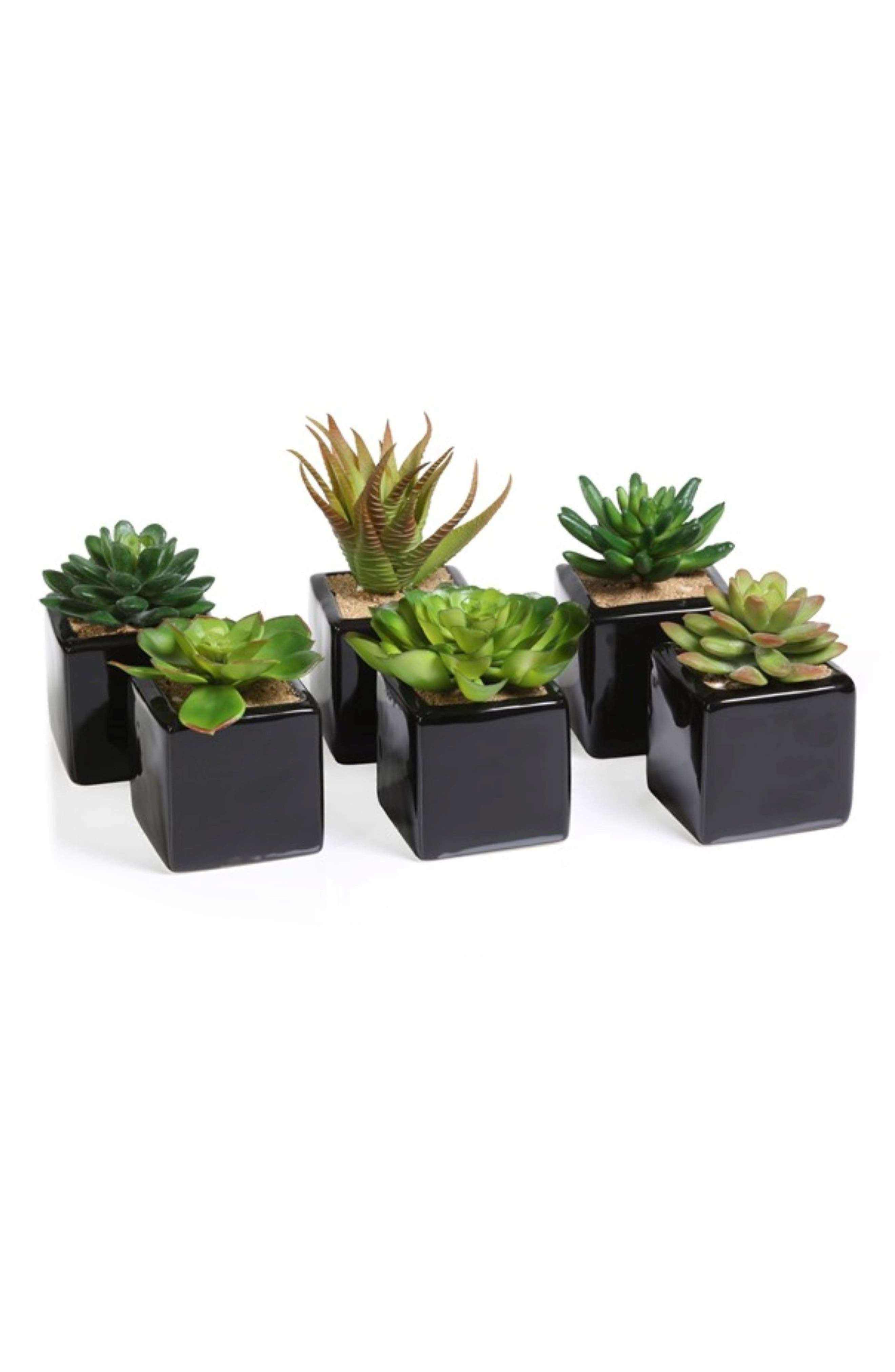 Set of 6 Faux Succulent Planters,                         Main,                         color, Green/ Black