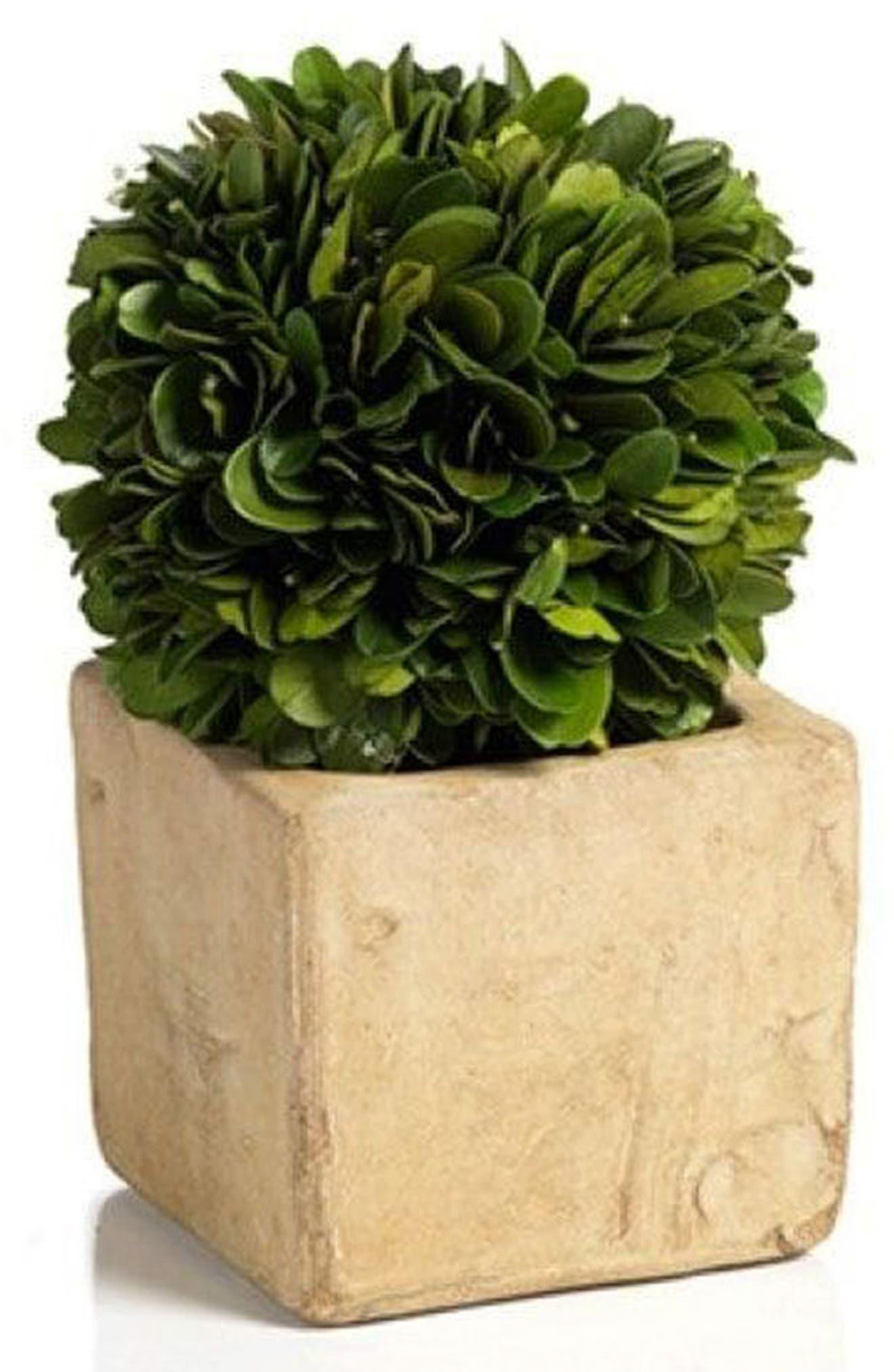 Carina Topiary Decoration,                             Main thumbnail 1, color,                             Green
