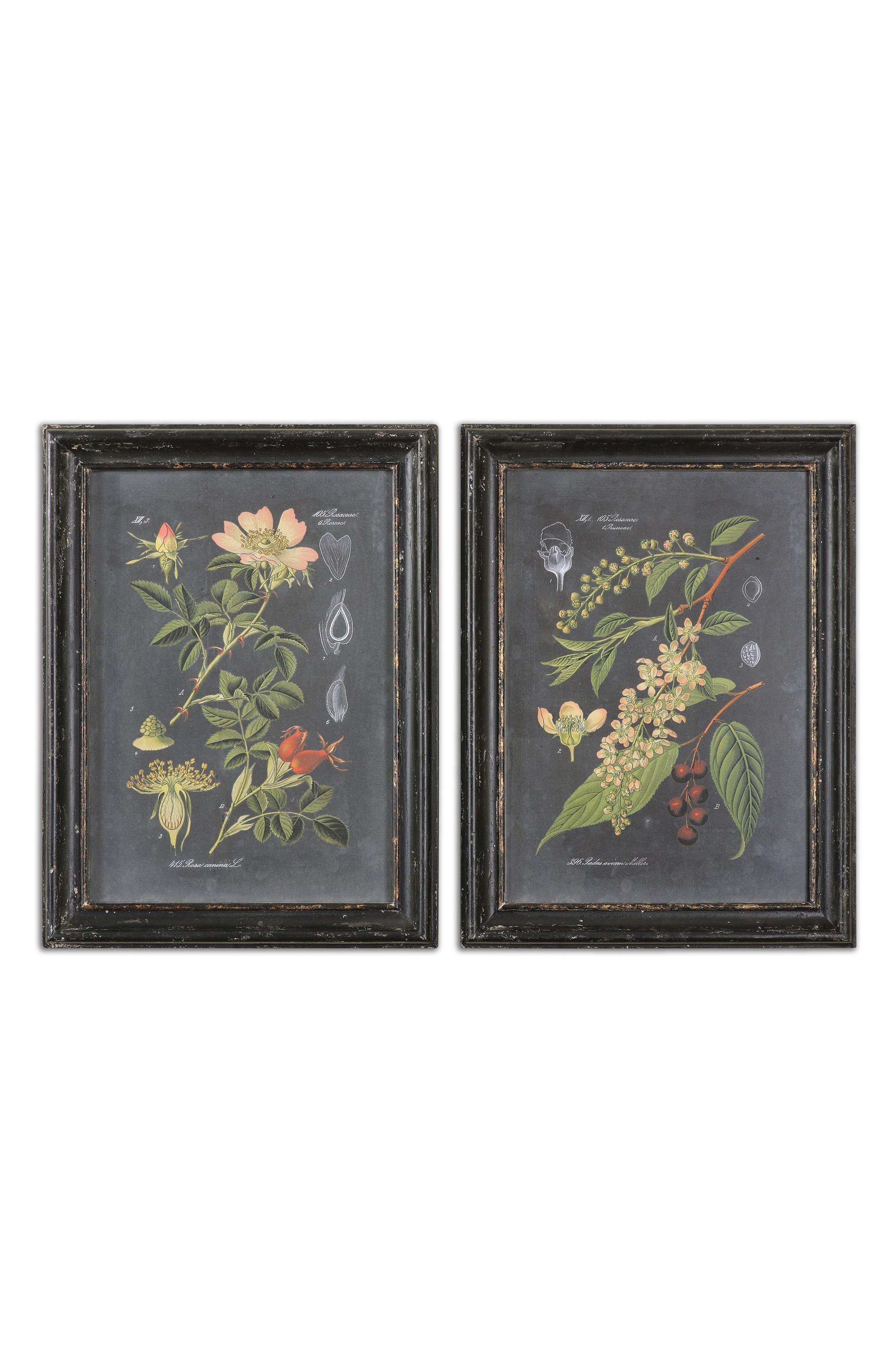 Midnight Botanicals Set of 2 Art Prints,                             Main thumbnail 1, color,                             Black