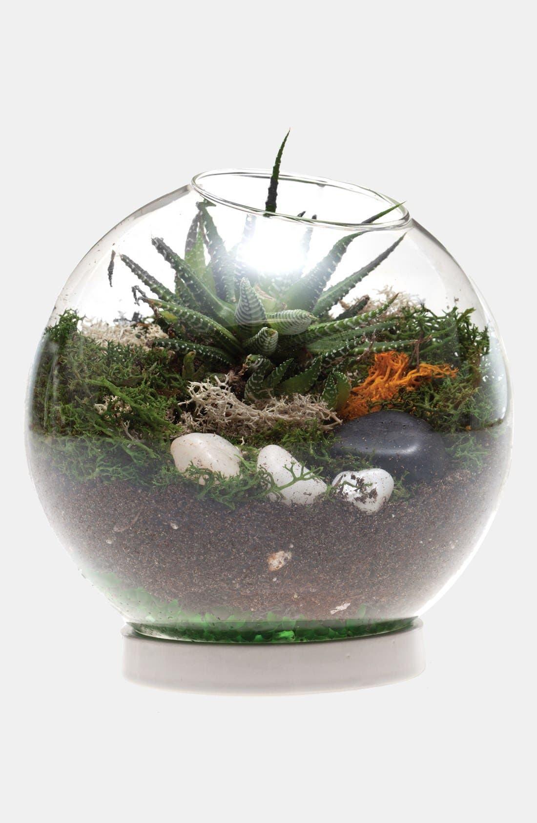 Alternate Image 2  - Globe Terrarium with Ceramic Base