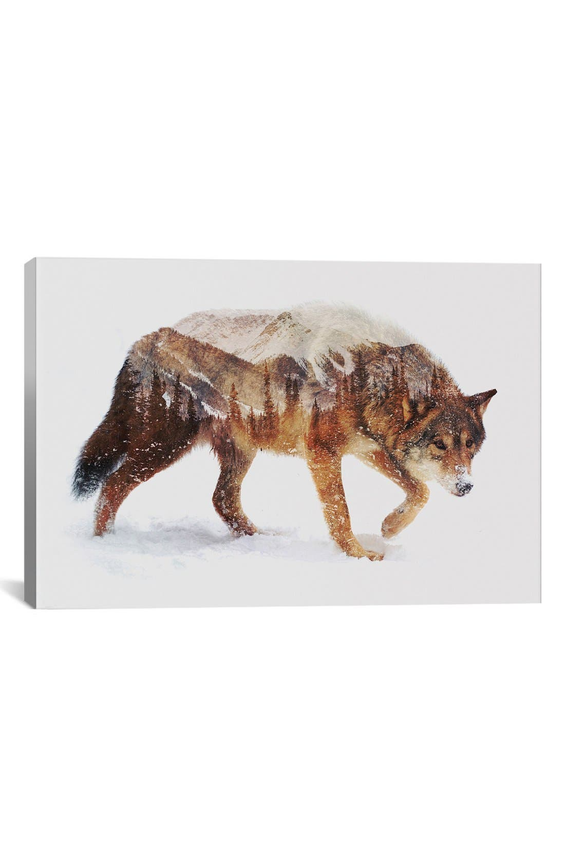 Main Image - iCanvas 'Arctic Wolf' Fine Art Print