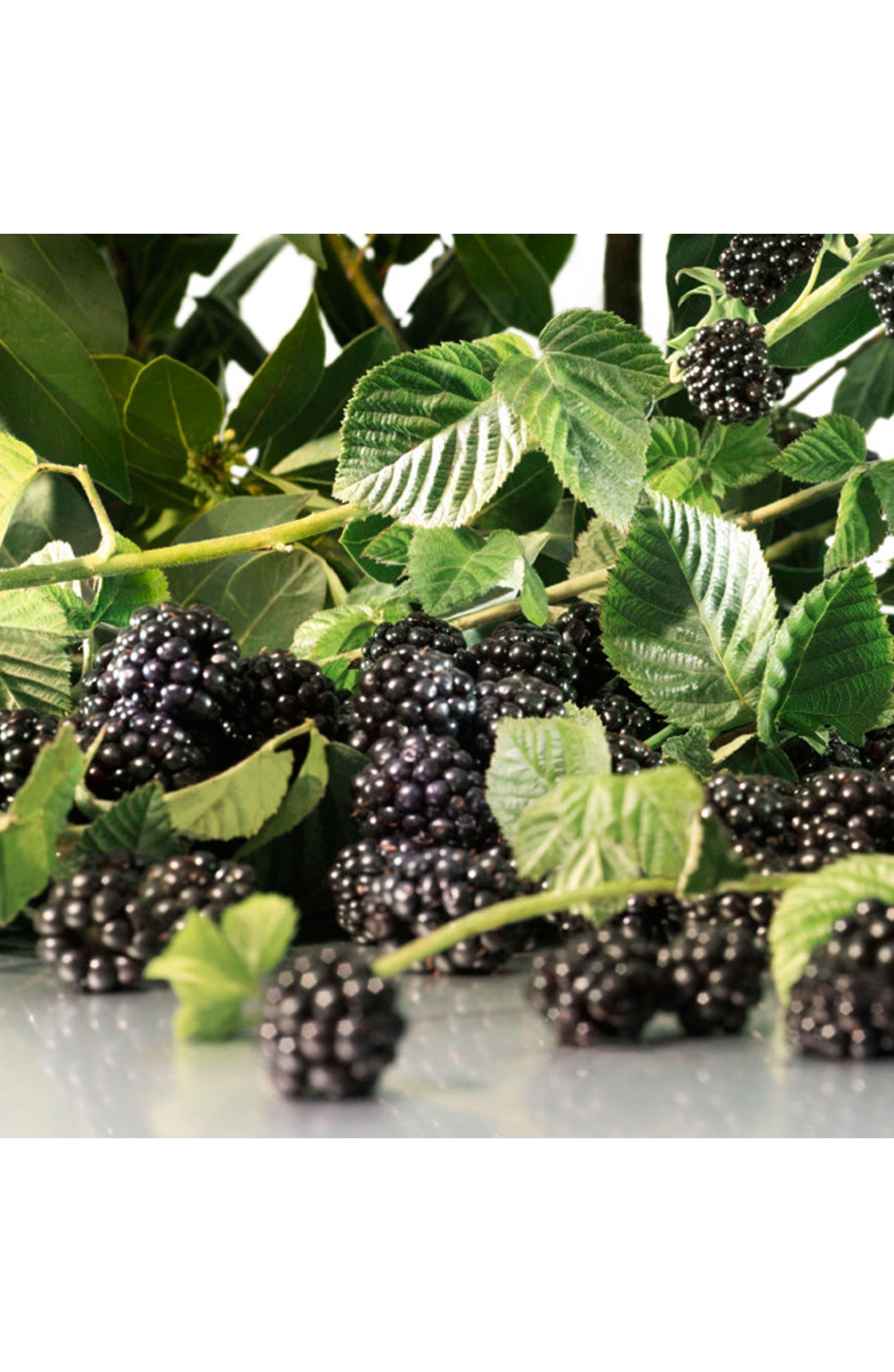 Alternate Image 4  - Jo Malone London™ Blackberry & Bay Bath Oil (8.5 oz.)