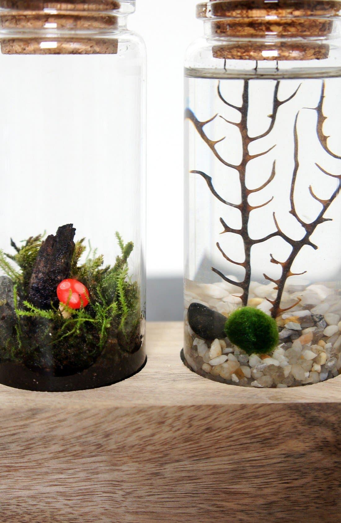 Alternate Image 2  - Moss + Twigg Land & Sea Terrarium Set