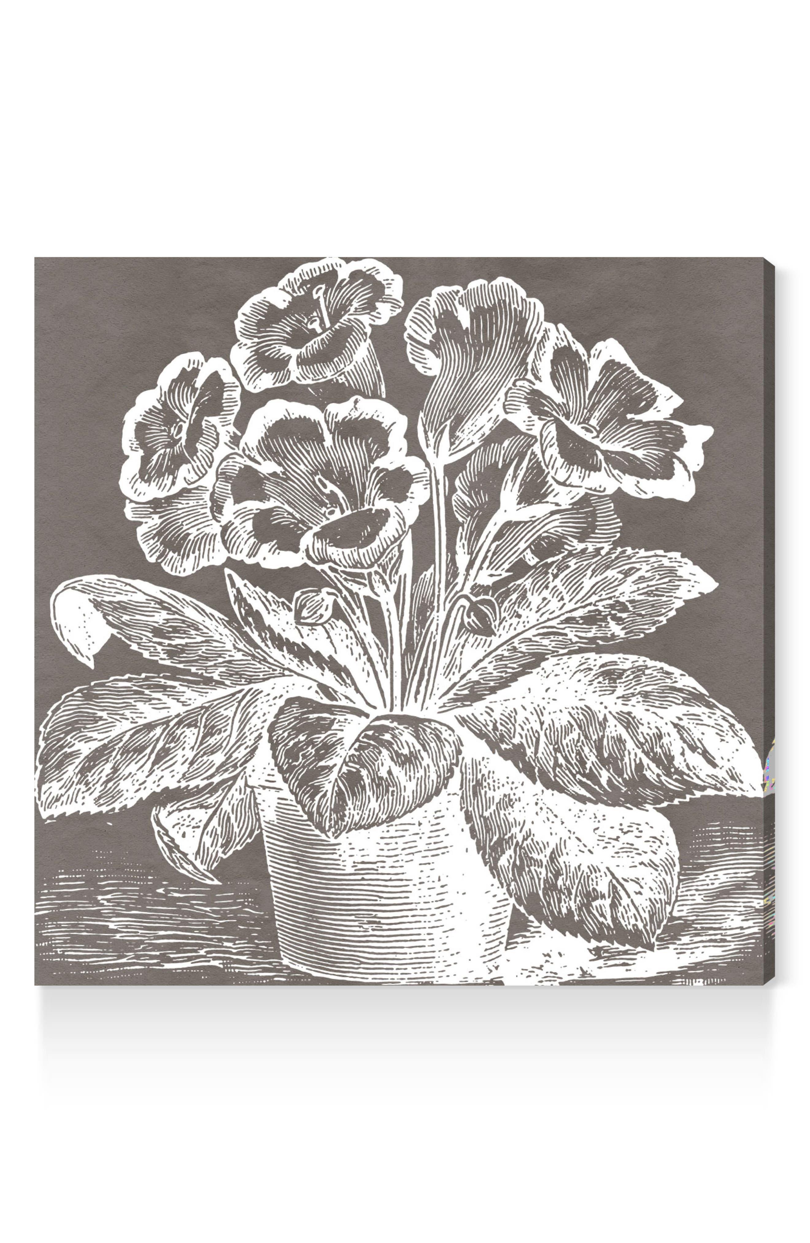 Potted Primrose Canvas Wall Art,                         Main,                         color, Grey
