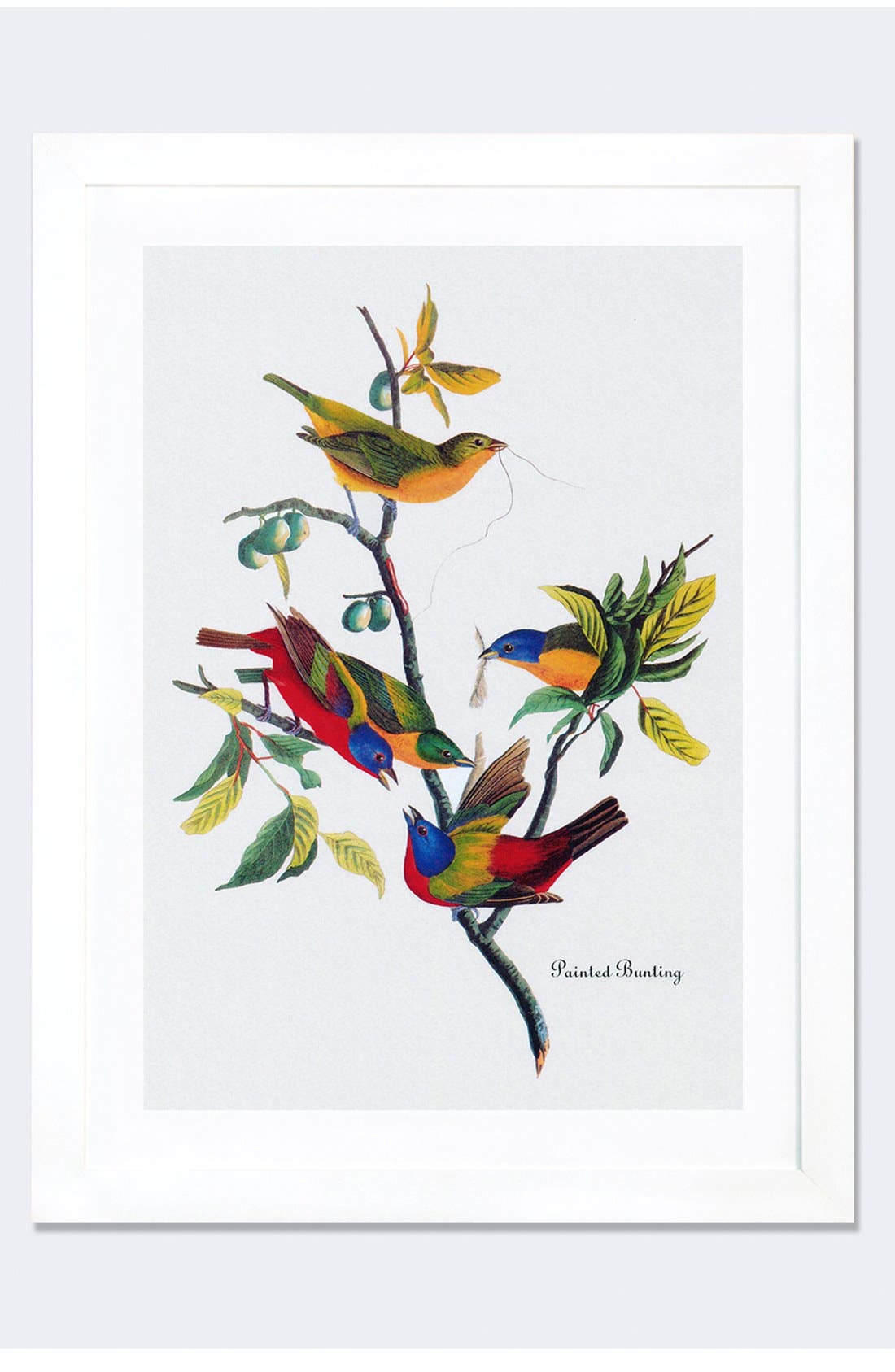 'Painted Bunting' Framed Fine Art Print,                         Main,                         color, White