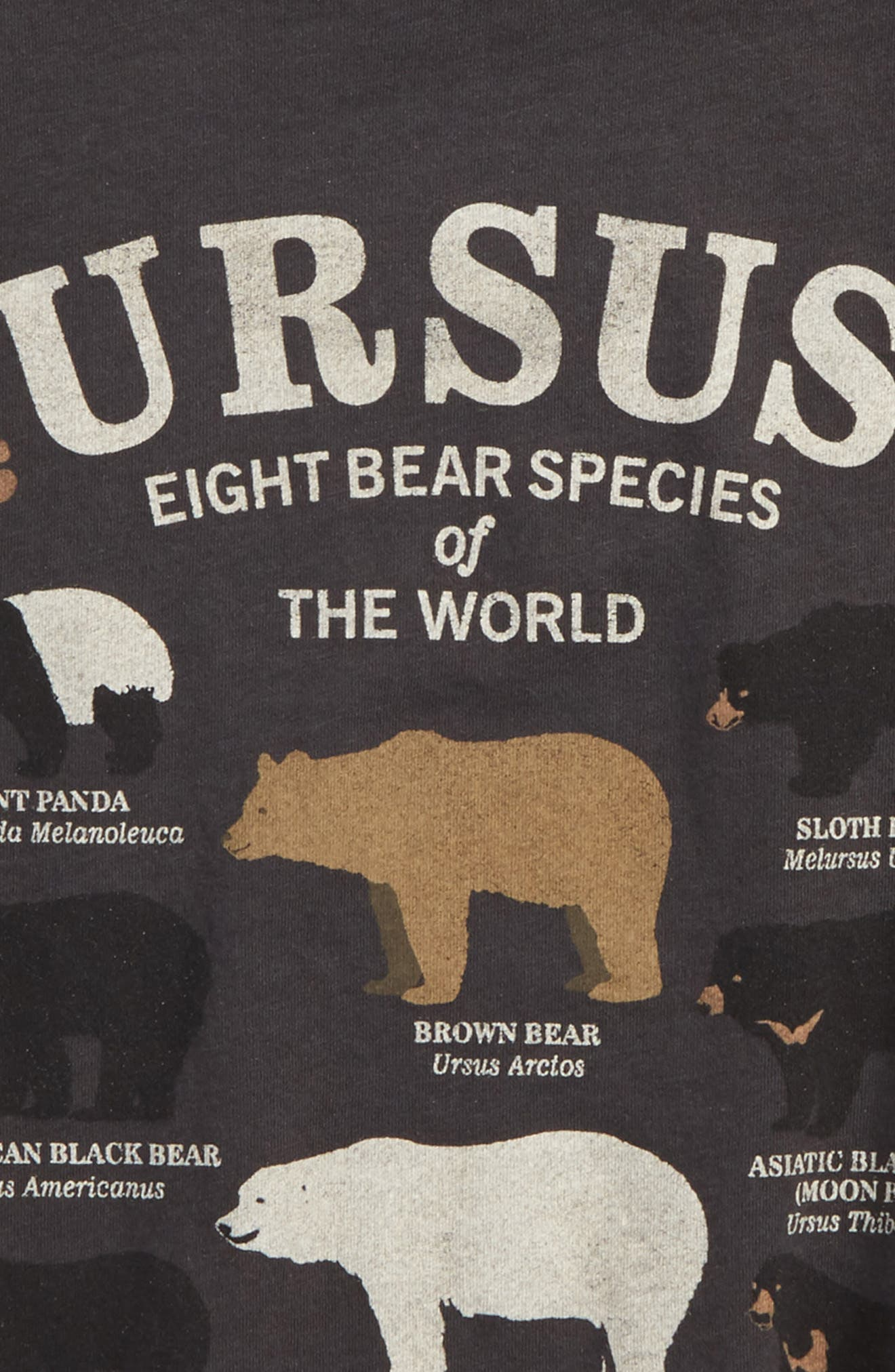 Alternate Image 2  - Peek Bear Species Graphic T-Shirt (Toddler Boys, Little Boys & Big Boys)