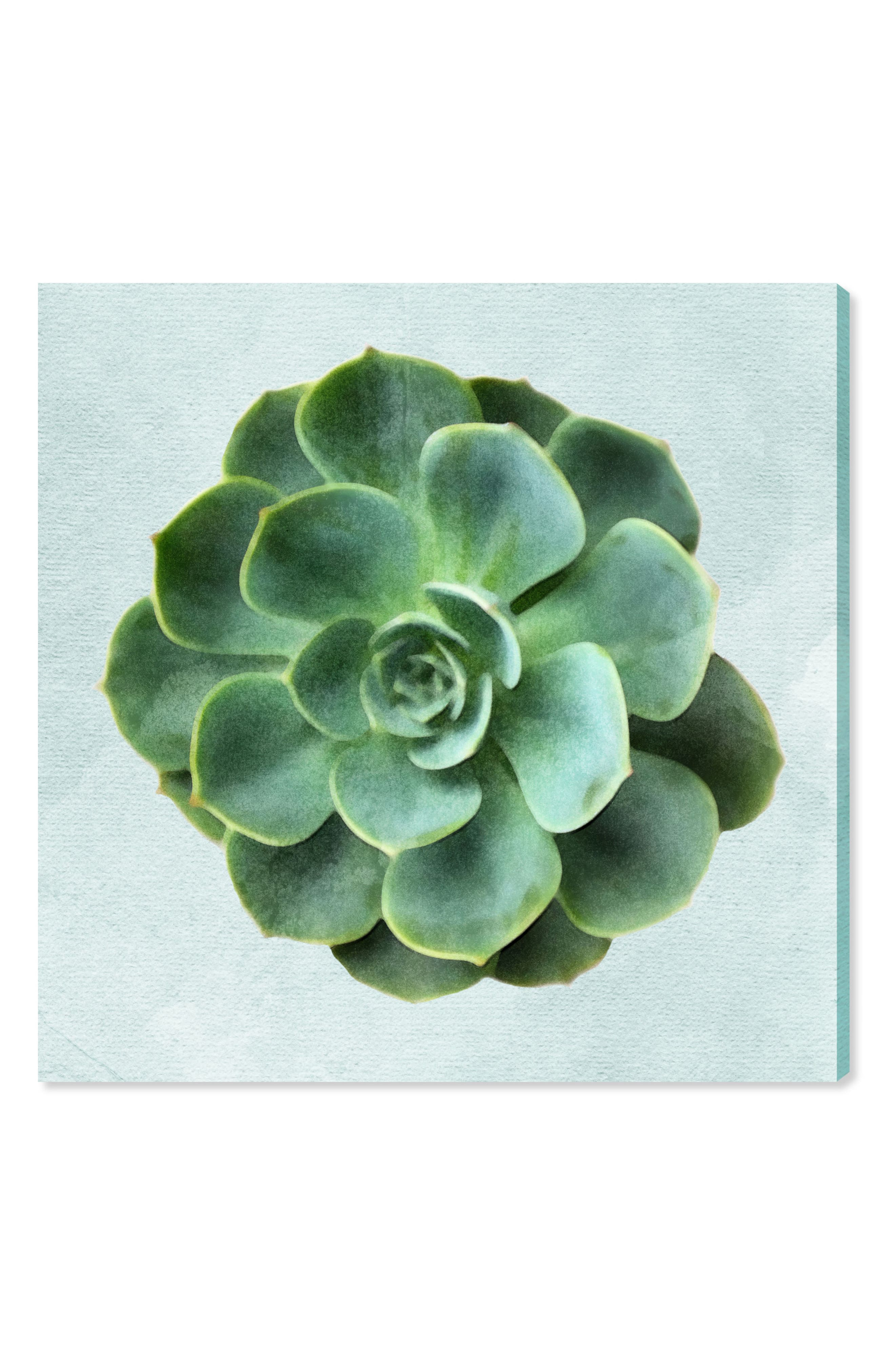 Succulent Dream III Canvas Wall Art,                         Main,                         color, Green