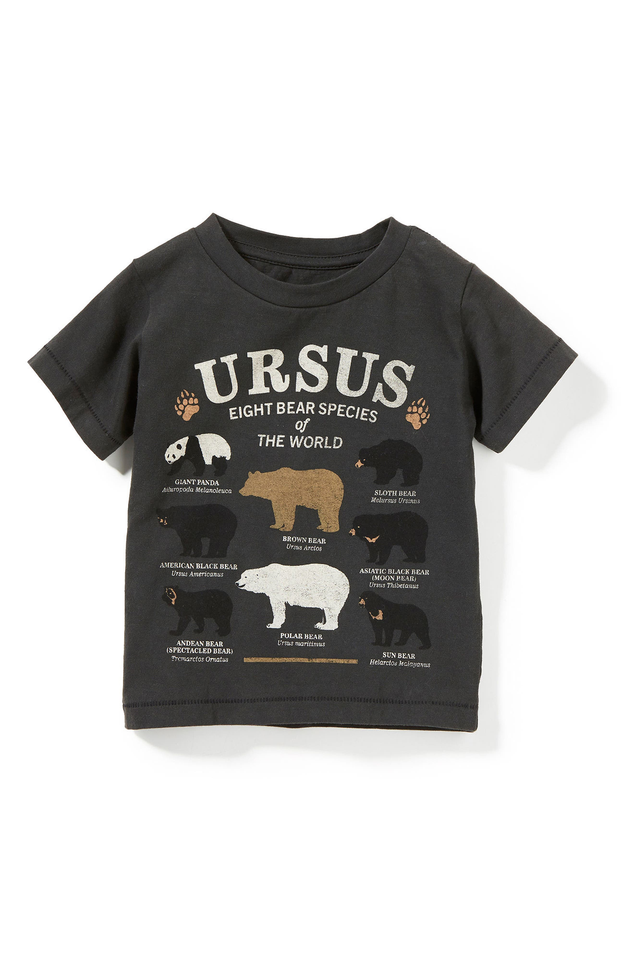 Peek Ursus Graphic T-Shirt (Baby Boys, Little Boys & Big Boys)