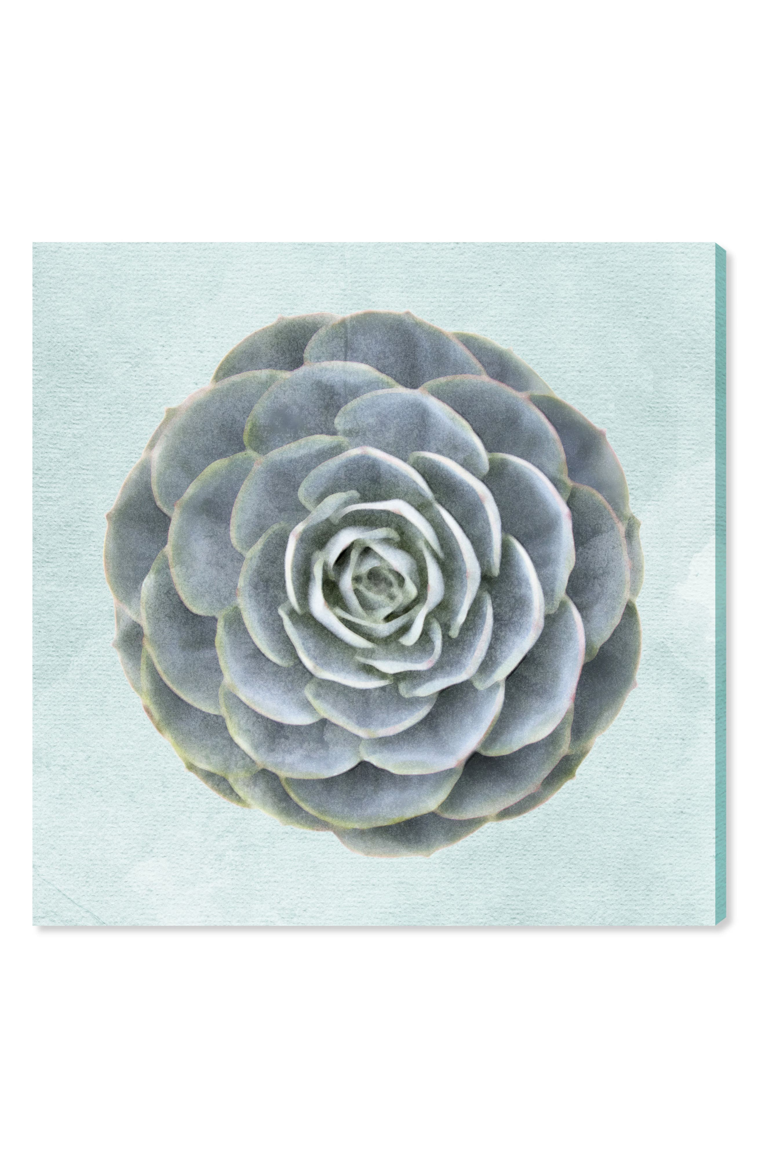 Alternate Image 1 Selected - Oliver Gal Succulent Dream II Canvas Wall Art