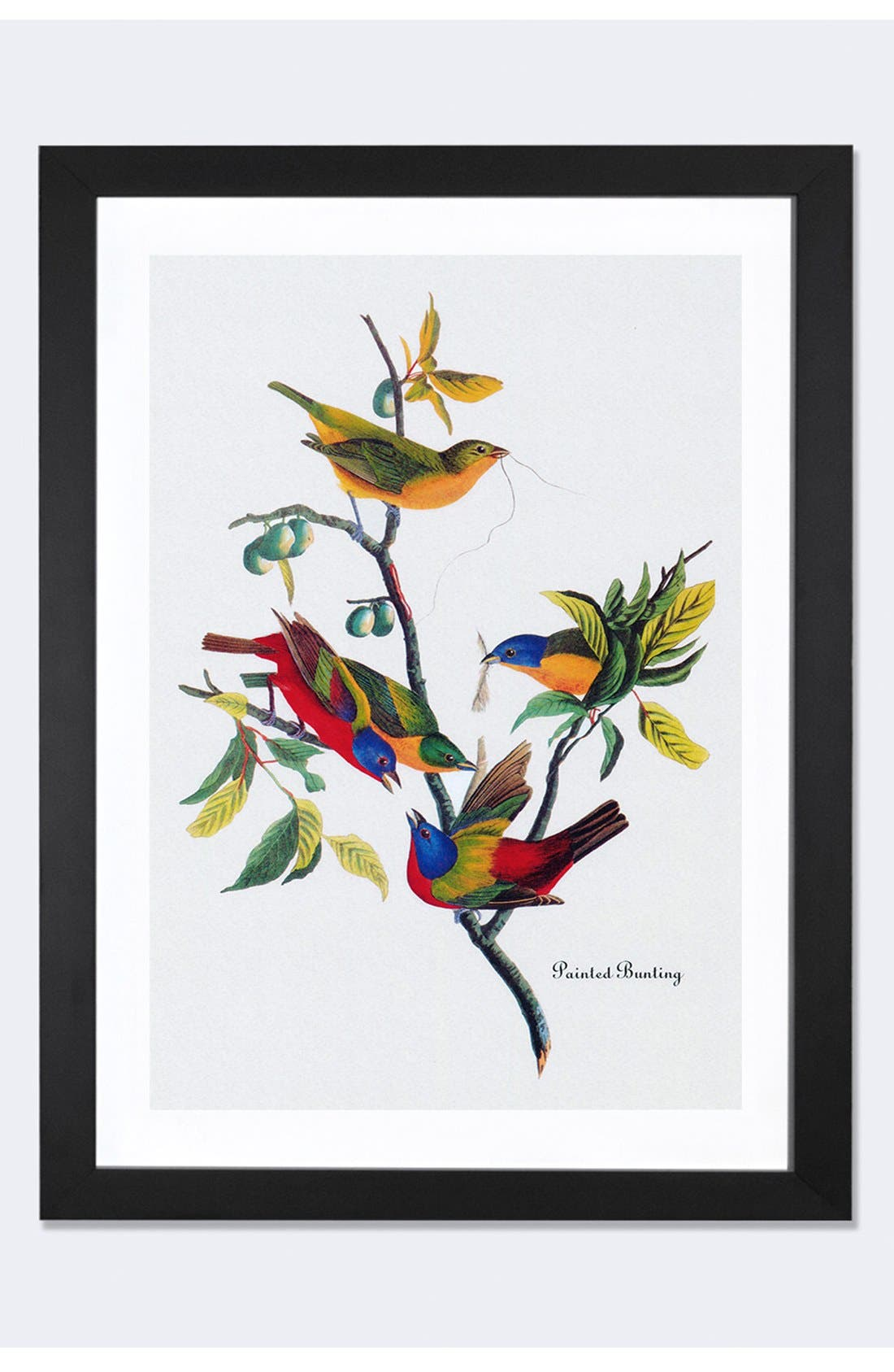 'Painted Bunting' Framed Fine Art Print,                             Main thumbnail 2, color,