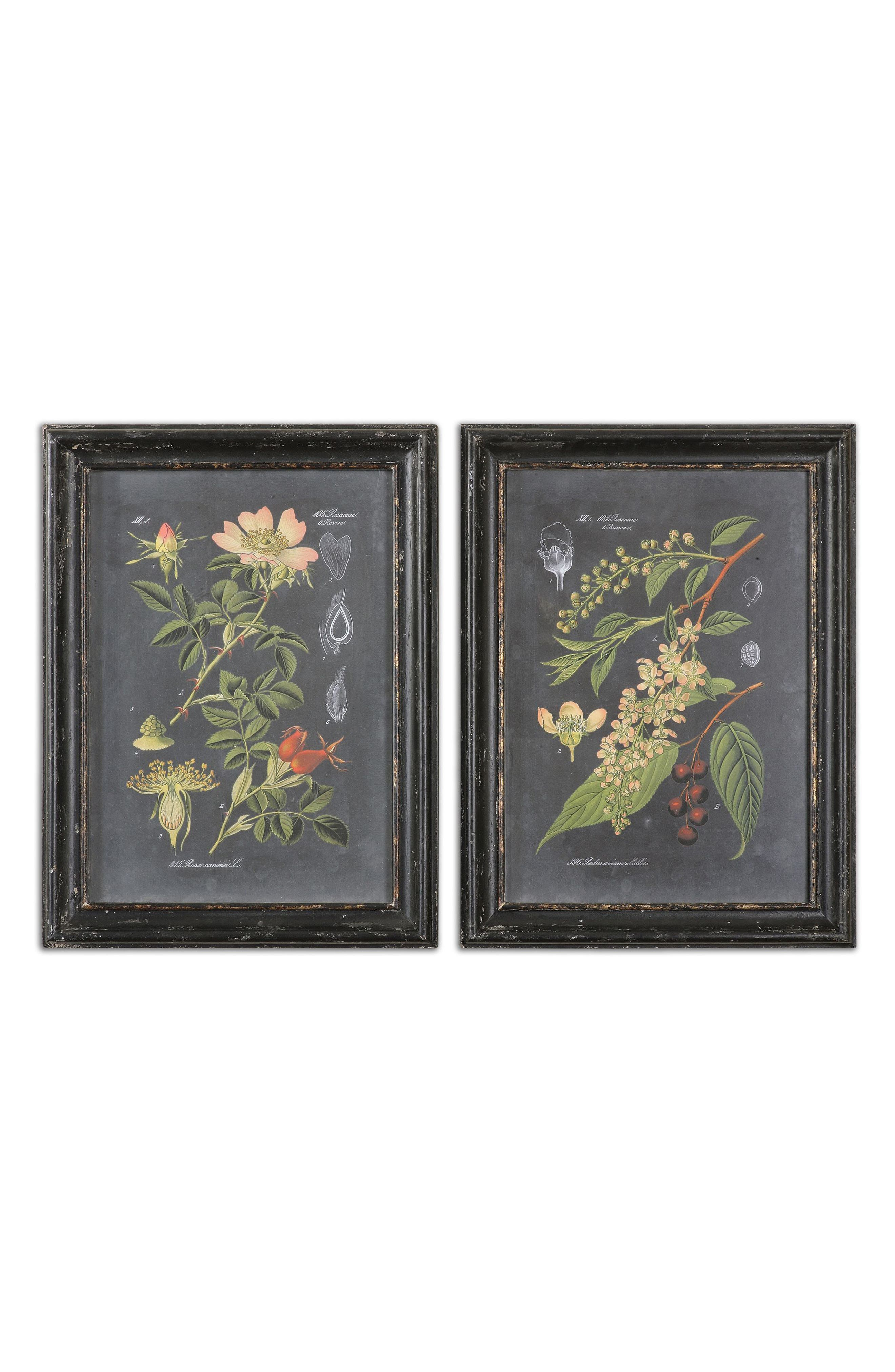 Midnight Botanicals Set of 2 Art Prints,                         Main,                         color, 001