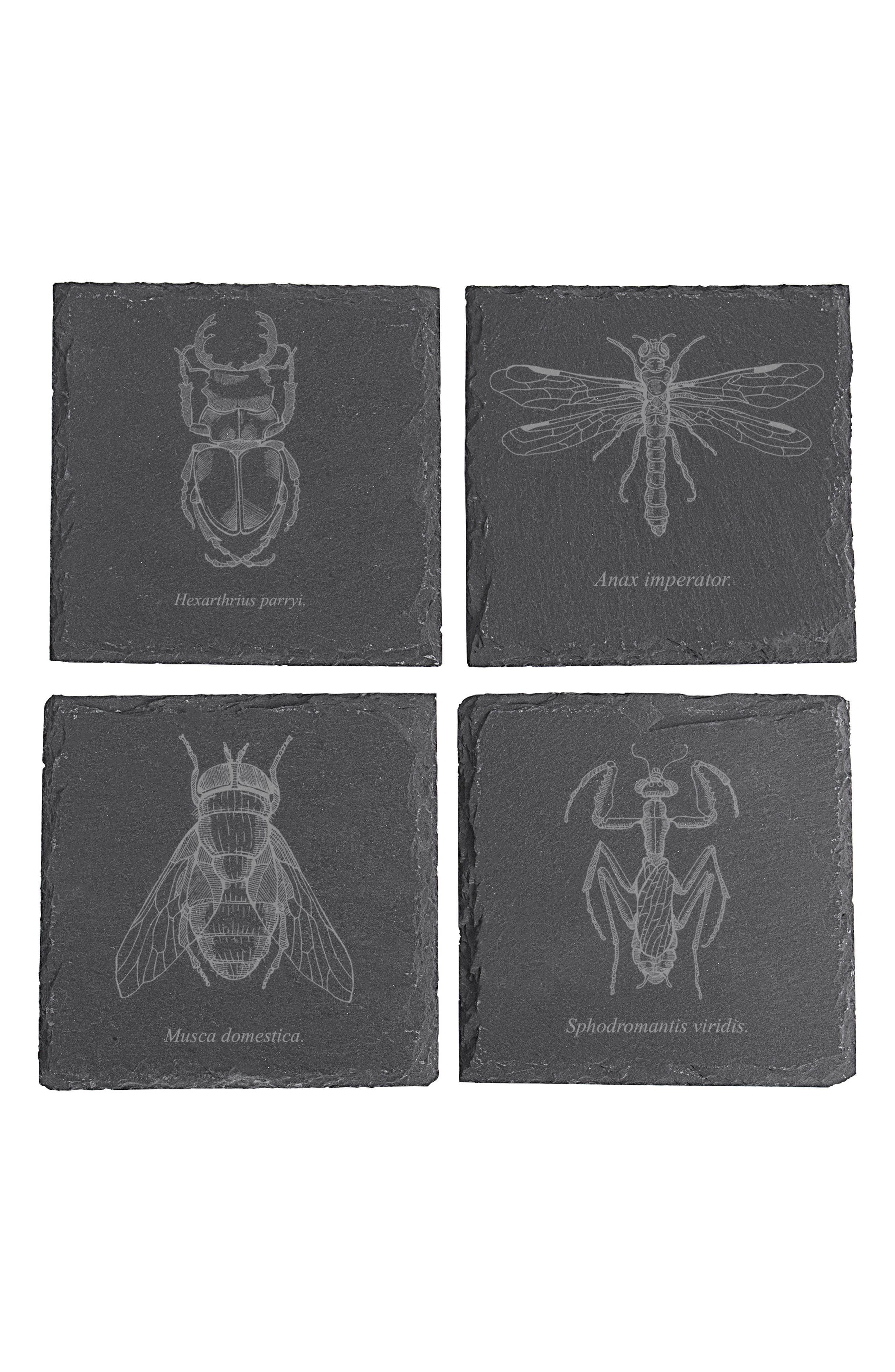 Set of 4 Insect Slate Coasters,                         Main,                         color, BLACK