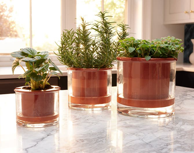 Self-watering pots holding plants and herbs.